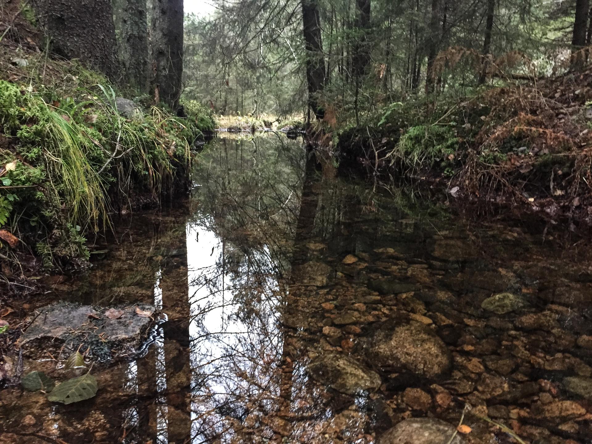 Det har ikke vært tørrere i oktober i Oslo siden målinger startet i 1937. I skogen er det likevel nok av ferskvann.
