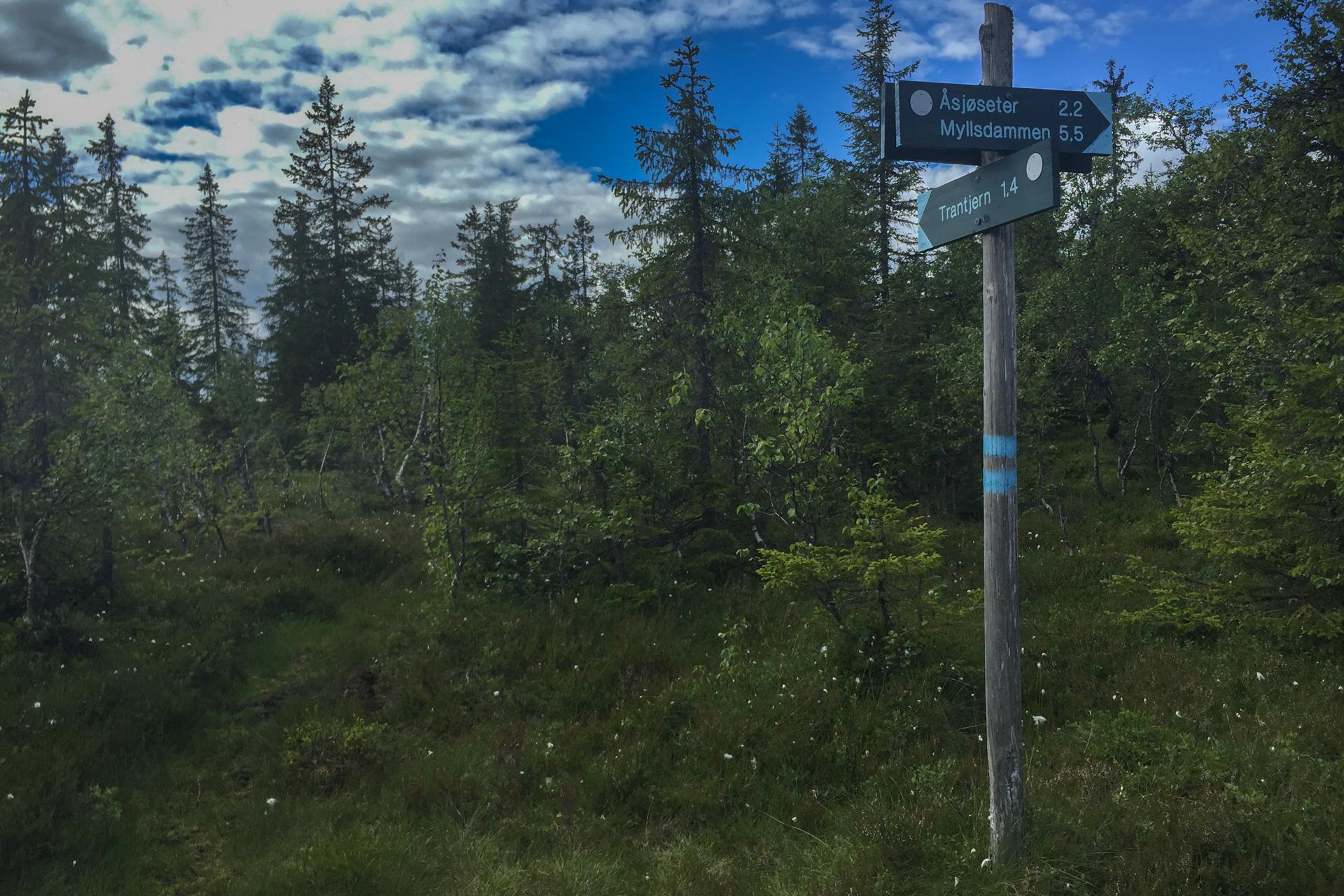 I dette krysset burde jeg ha sjekket kartet. Det gjorde jeg ikke, og tok til Trantjern. Det er totalbom for NUC 54 km ruta som går videre til toppen på Kollern.