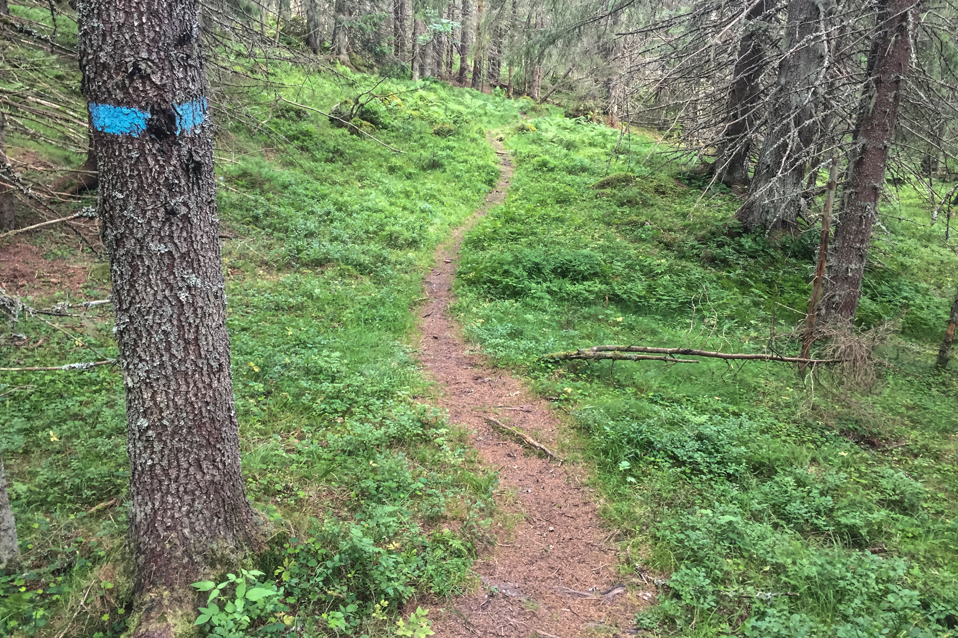 Etter Pershusfjellet kommer denne fine stien mot Finnerudseter.