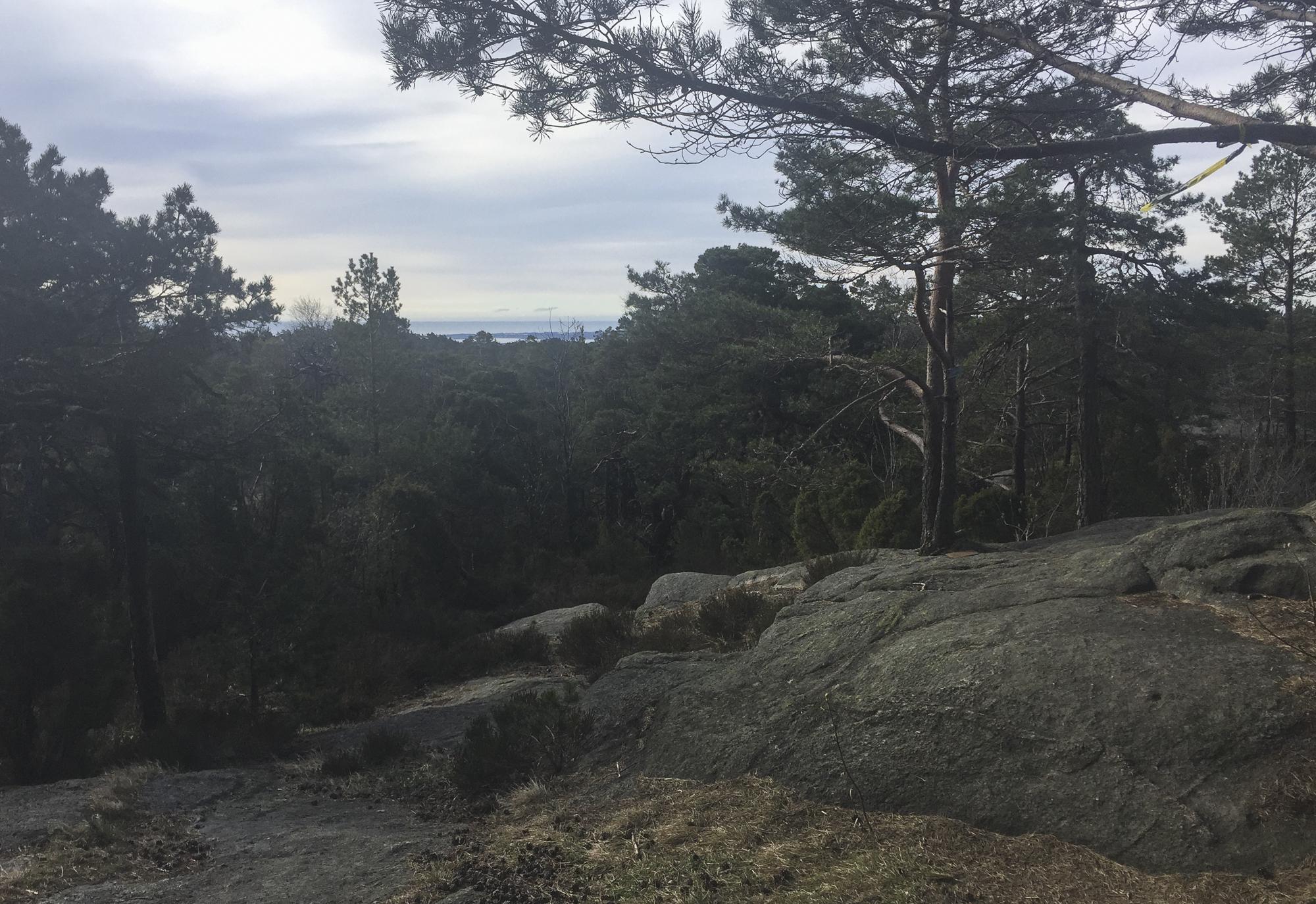 I skogen er det tørt fjell som dette å løpe på.