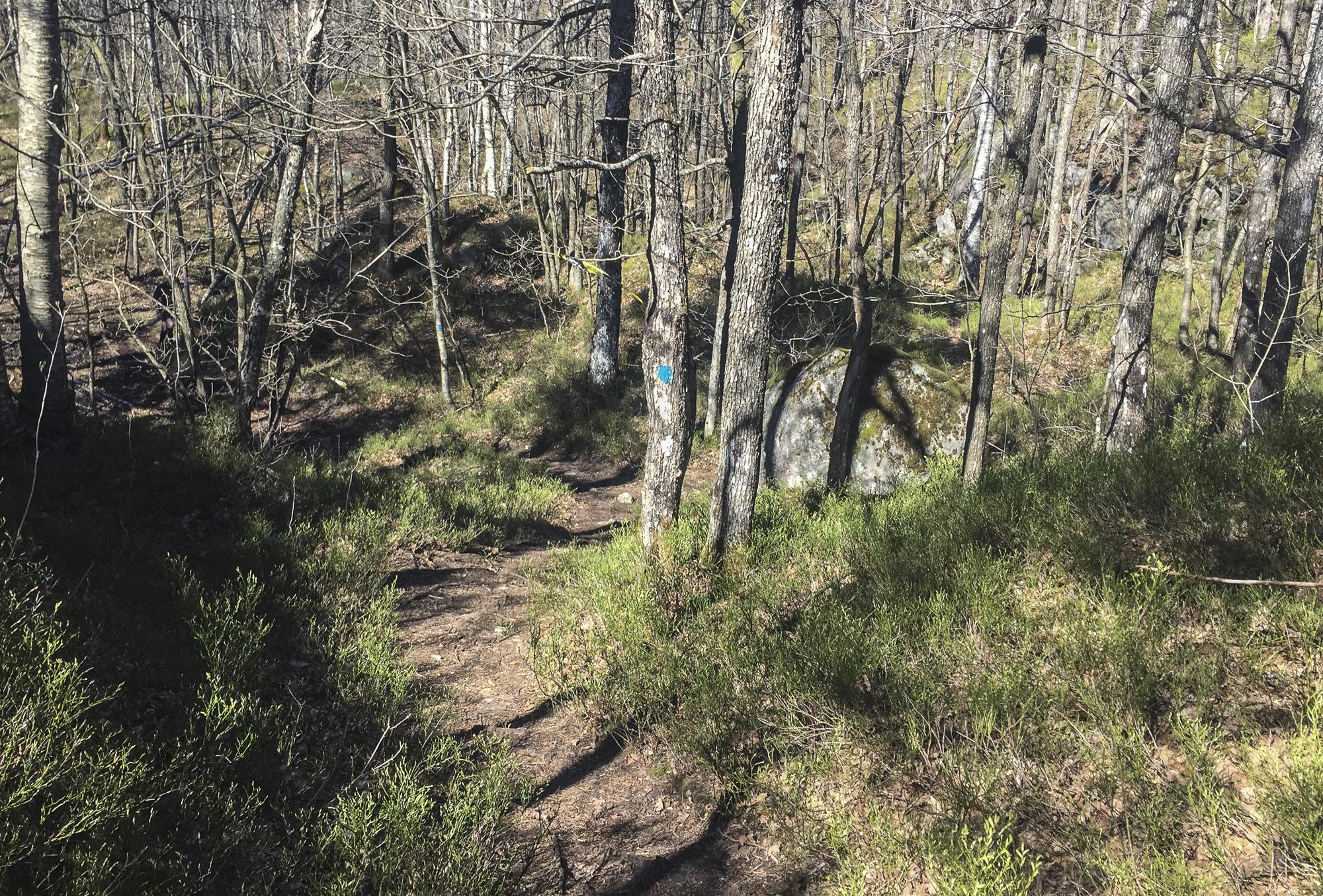 Sjekk den fine stien. Her hadde det vært gøy å løpe.