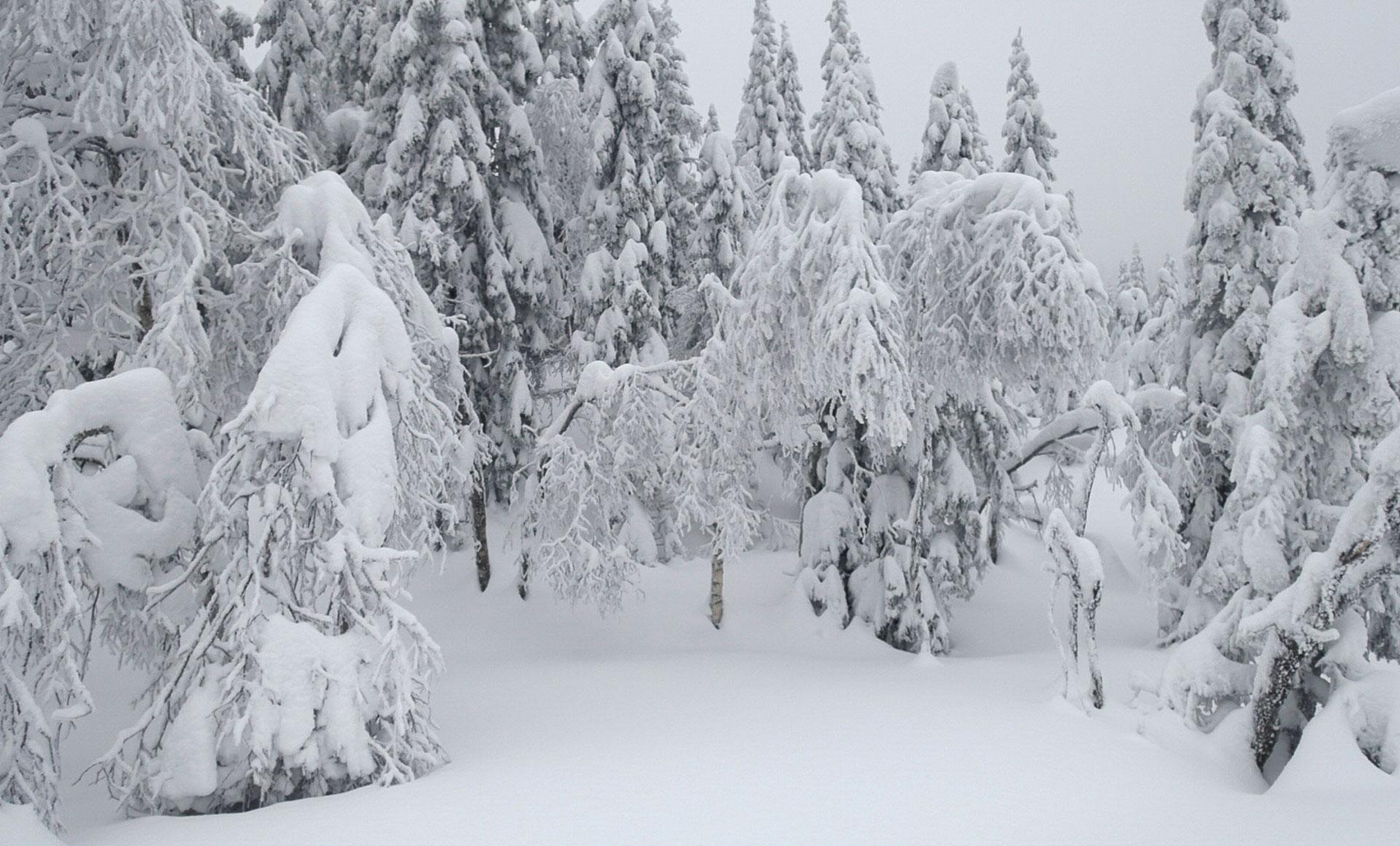 Er dette trær eller noe annet levende? Foto: Bjørnar Eidsmo.