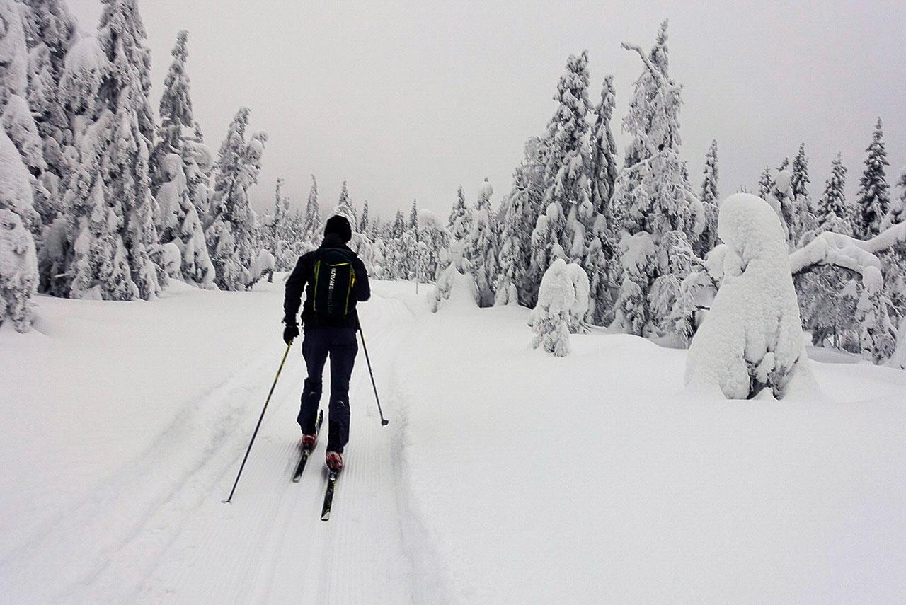 Johannes trives på skuterkjørte løyper blant snøtunge trær. Foto: Bjørnar Eidsmo.