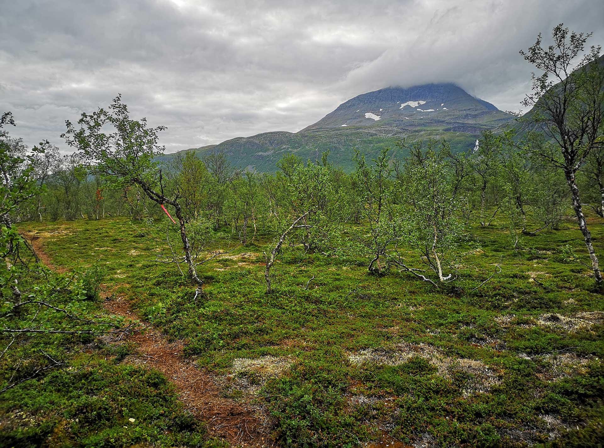 Mellom Hamperokken og Tromsdalstind får du et lettløpt og fint parti i bunn av dalen. Da jeg så toppen av Tromsdalstind igjen så fjellet ut som et monster. Hvordan skulle jeg klare å komme opp igjen der? Å trene på lange og bratte bakker der du må gå raskt er lurt. Da jeg kom til toppen var lettelsen stor.