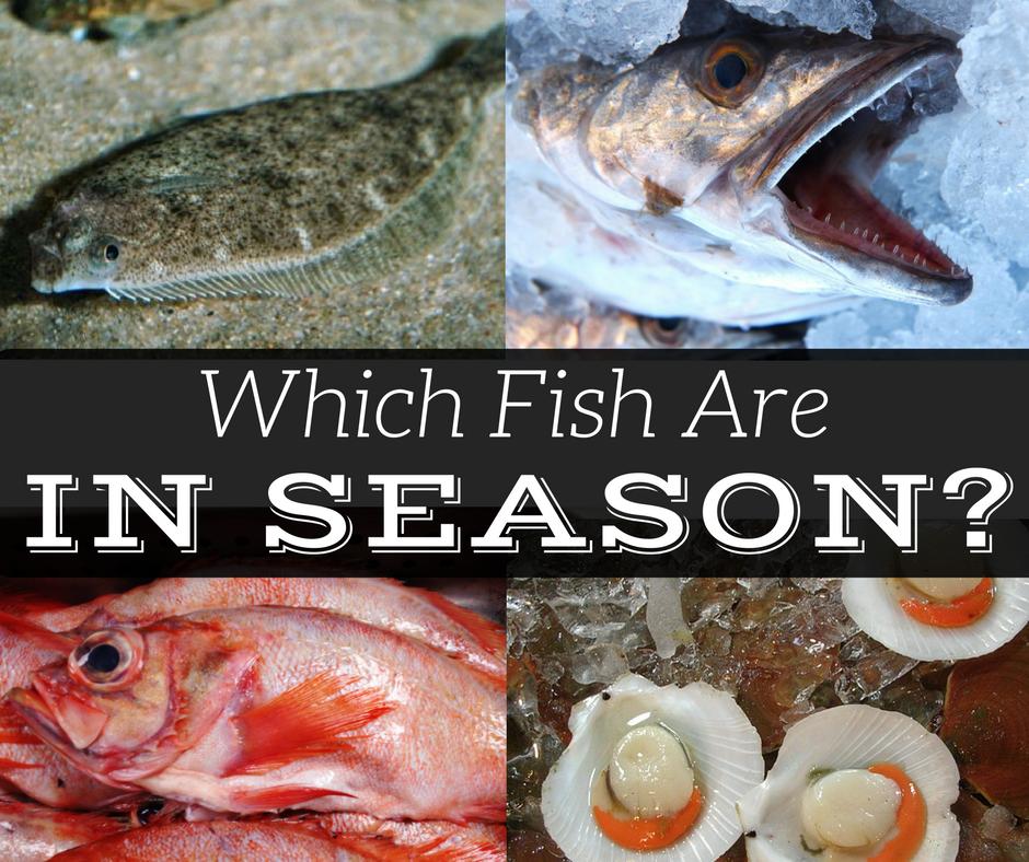 Seasonality of New England Fish