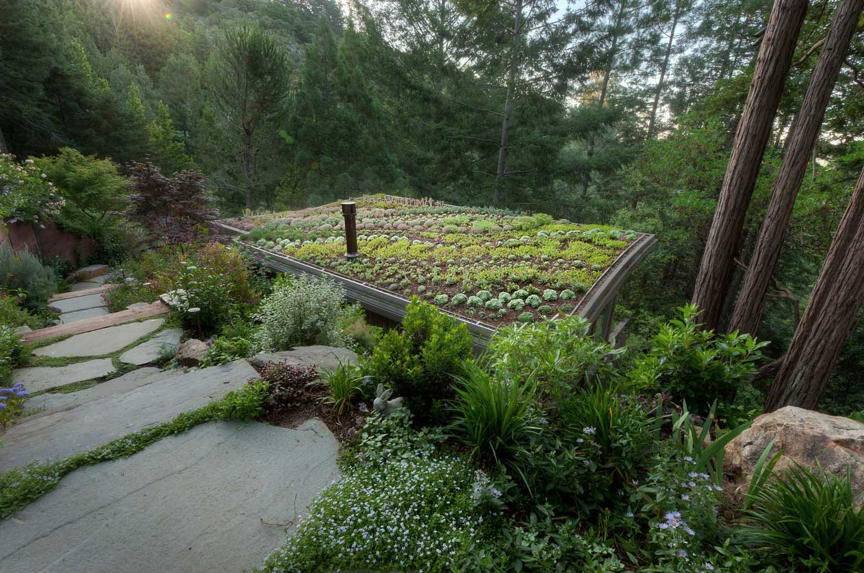 MILL-VALLEY-Green-roof-wide.jpg