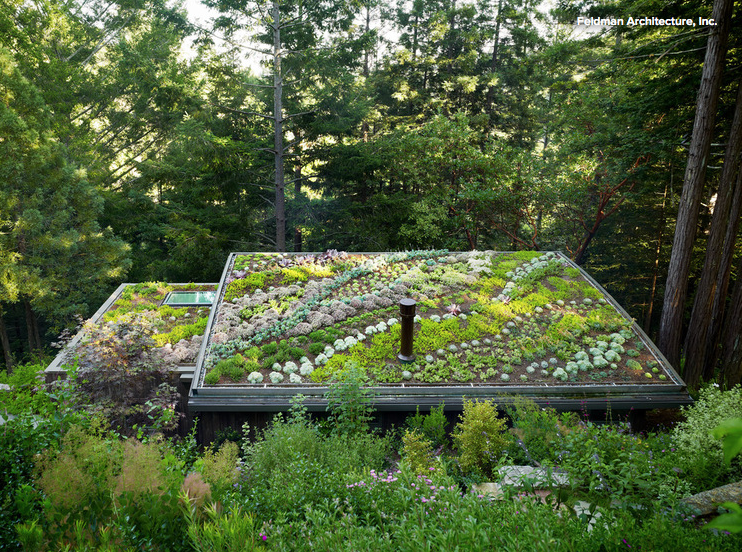 MILL VALLEY Green roof.png