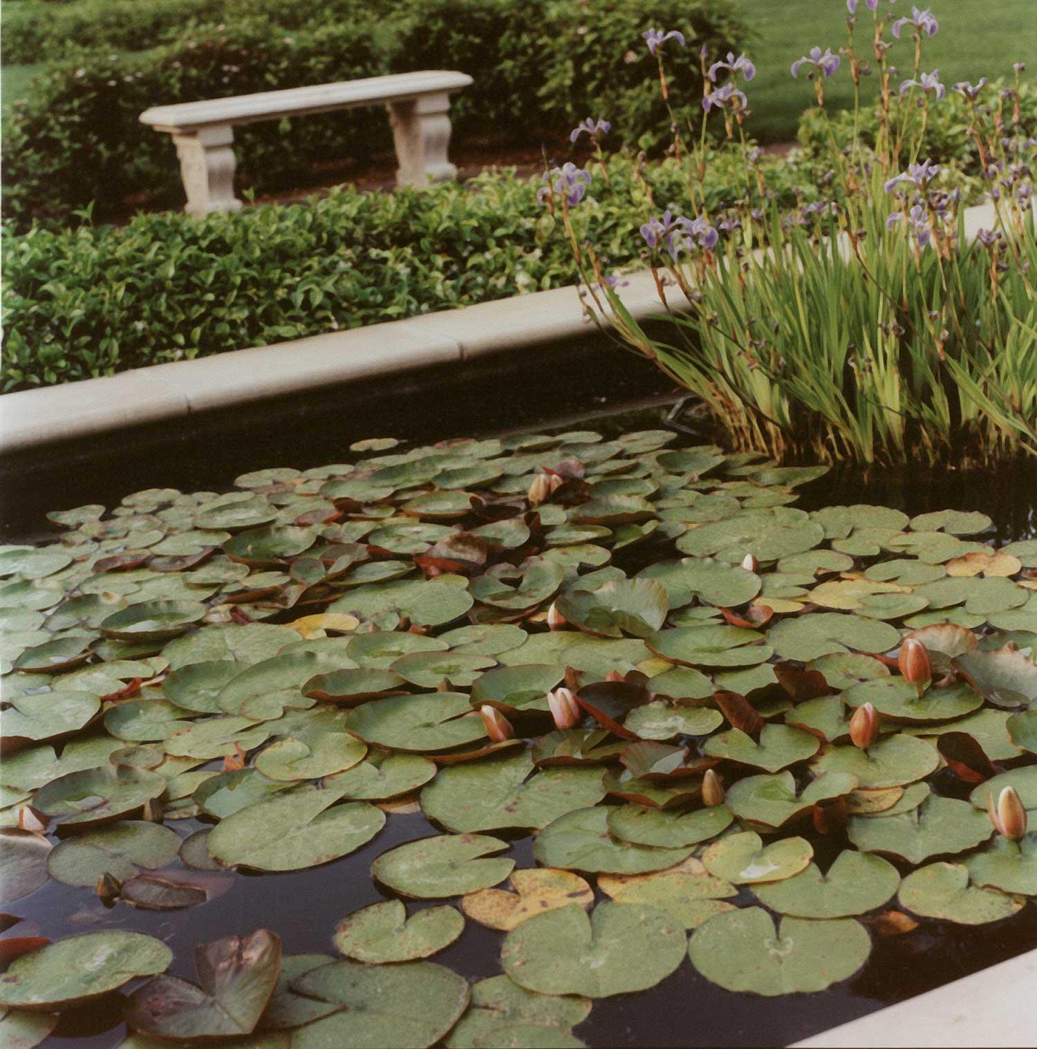 PIEDMONT - Herringer pond.jpg