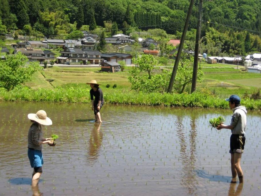 Rice field in Tsuyama