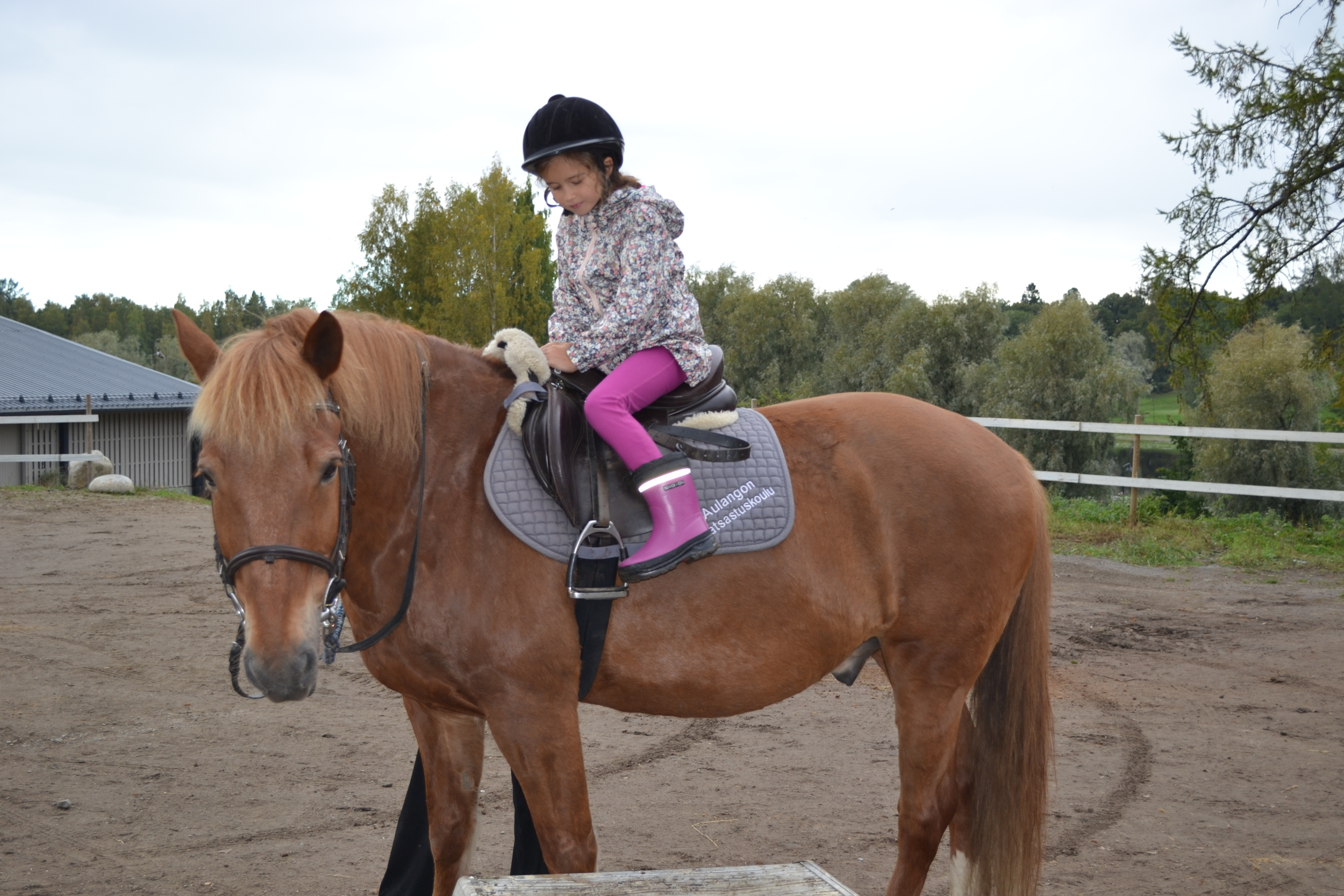 This horse was called Jouko
