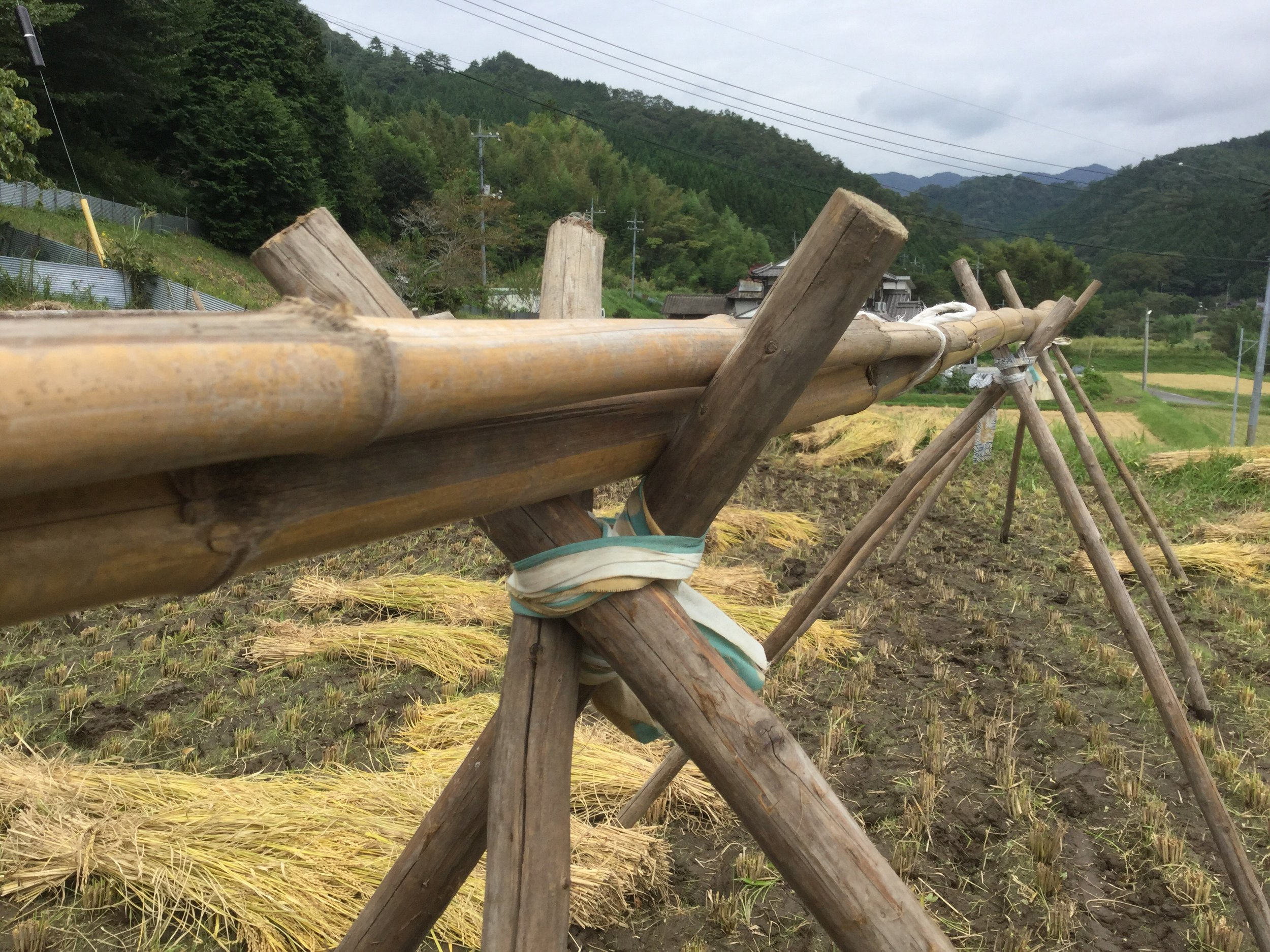 Stable bamboo tripods.
