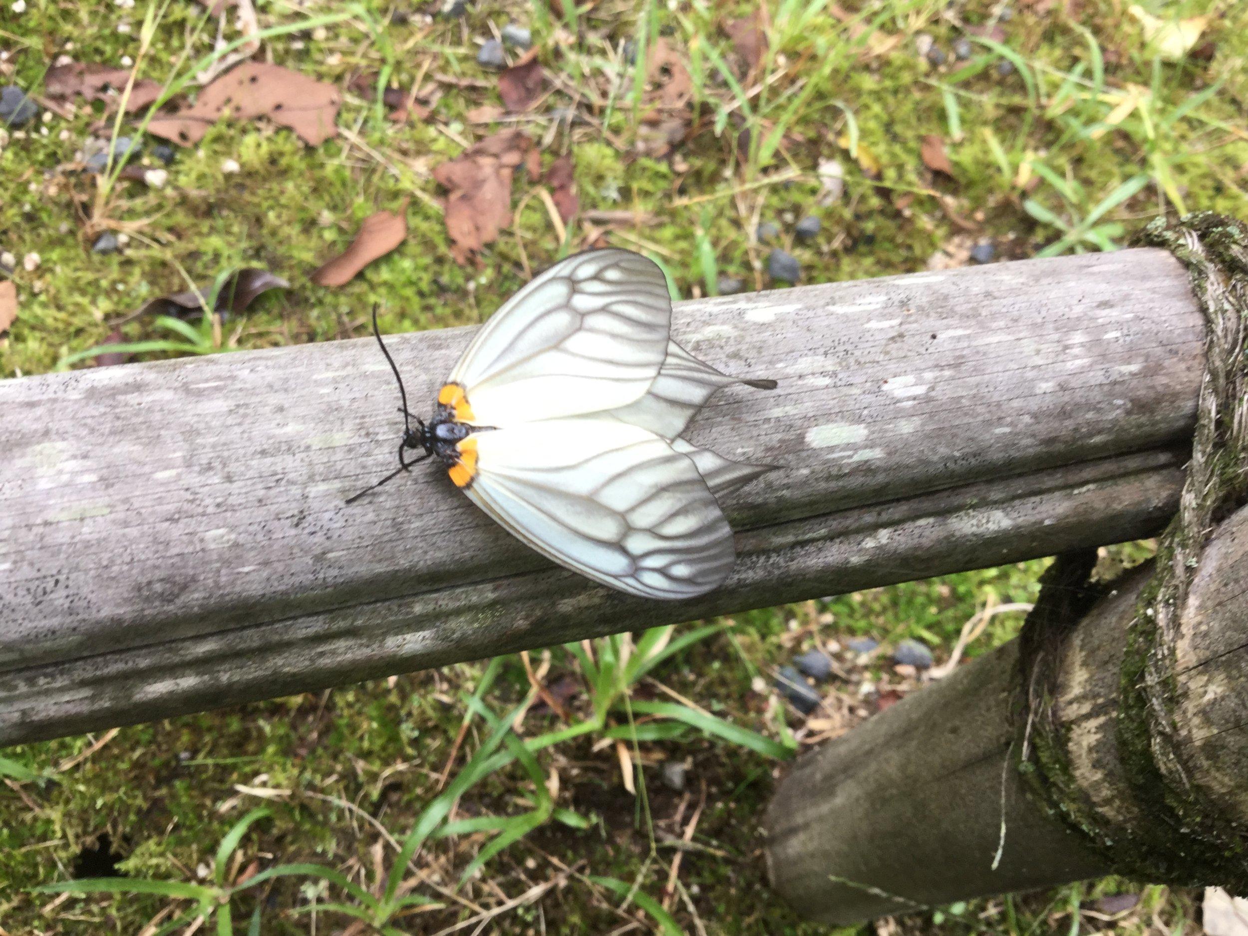 A little butterfly outside the tea pavilion