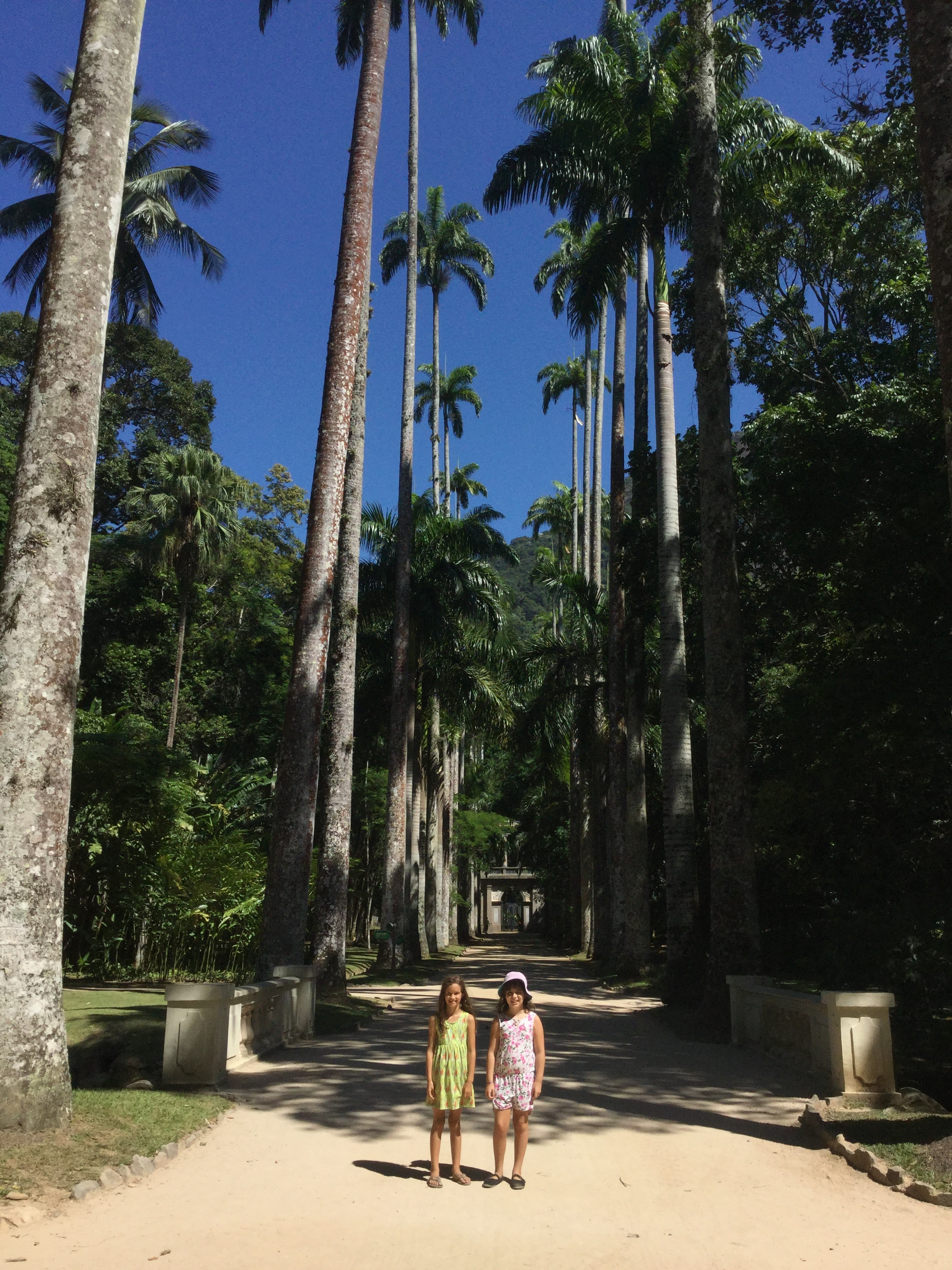 This is a classic Jardim Botanico picture. The boulevard of Emperor Palms, majestically reaching to the sky. And back to the topic of climbing palm trees - apparently in the past you could make so much money from selling the seeds of this palm tree that slaves would learn to climb them. Not everyone had emperors palms!