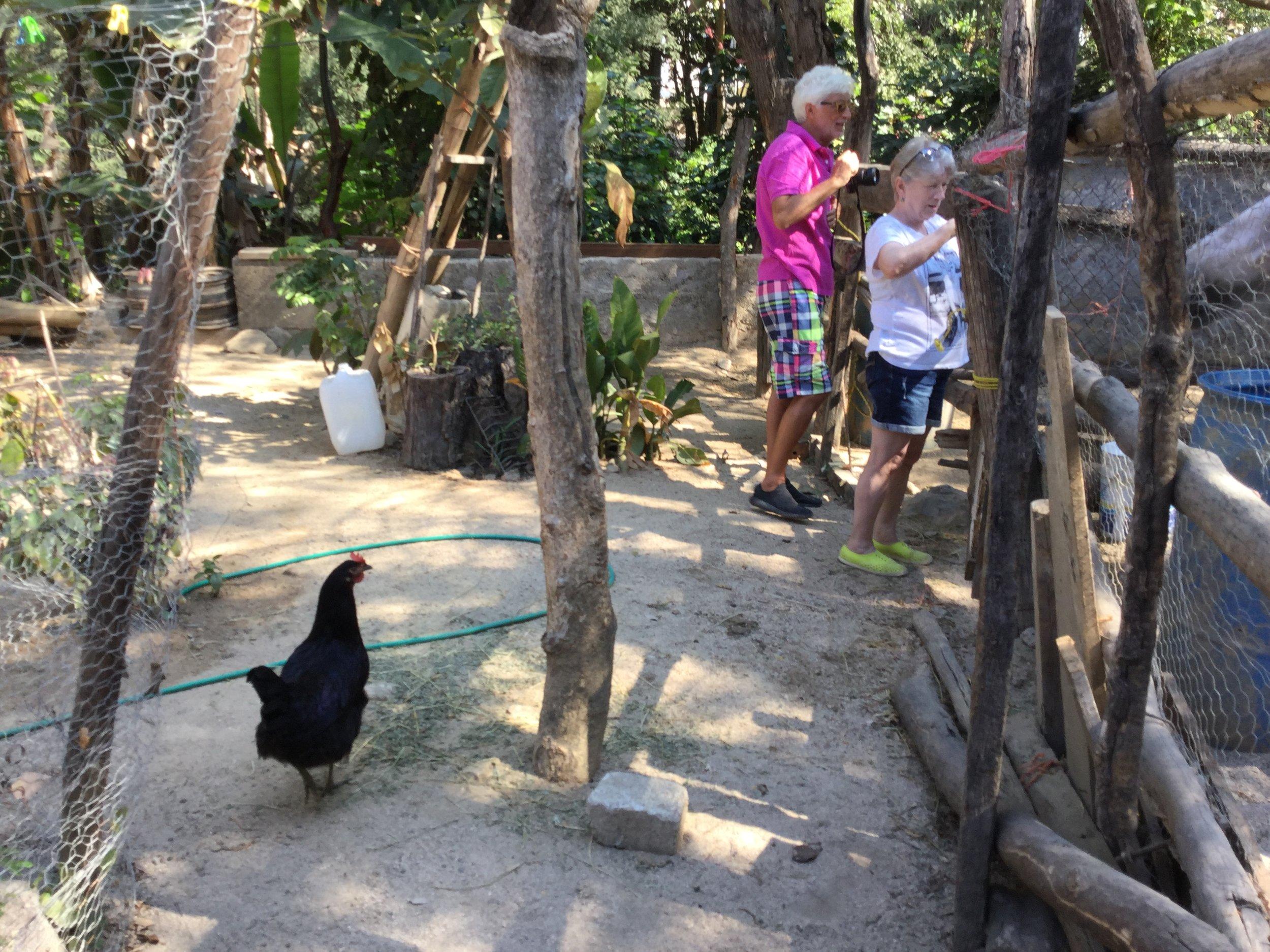 Dante, Linda and the black hen also had a visitation.
