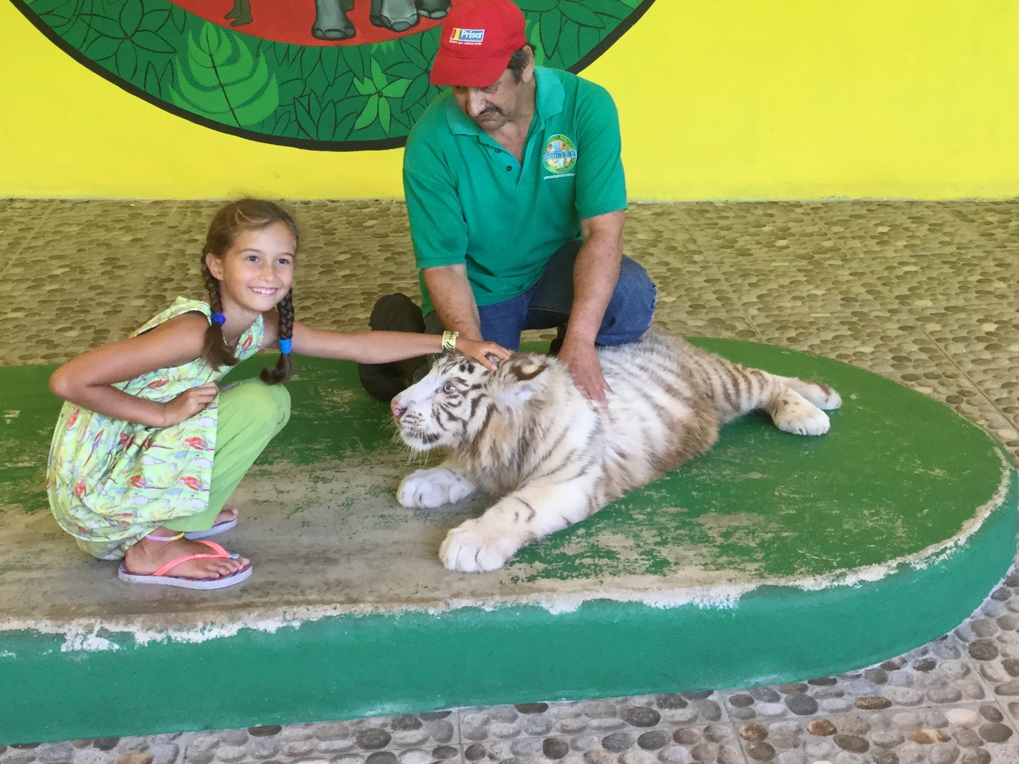 Here Lili is interacting with a Siberian tiger cub.