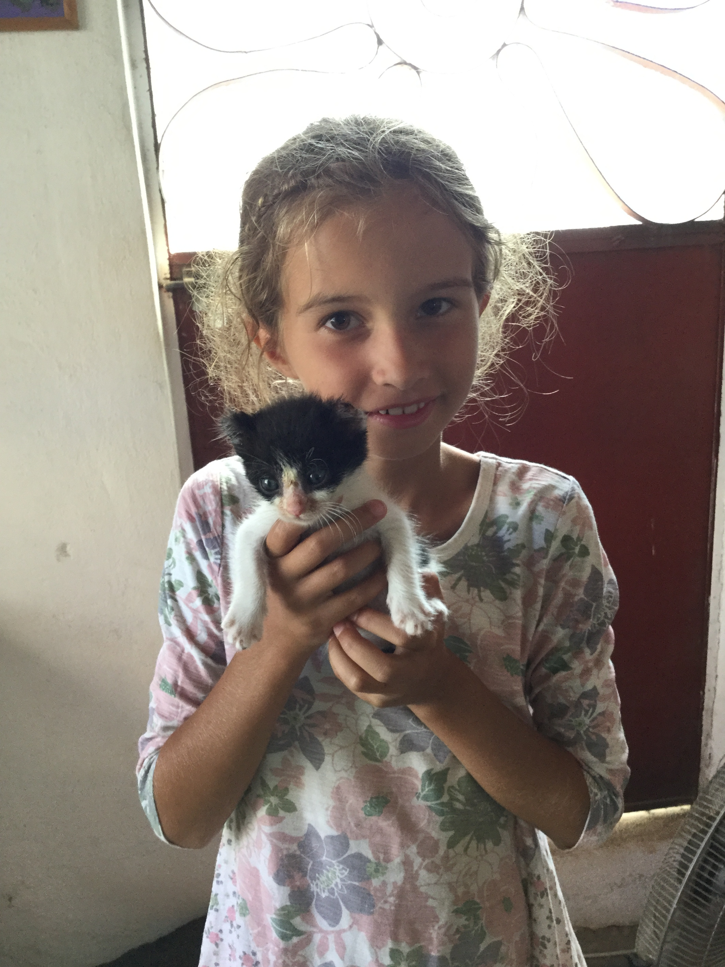 This little cat, E.T. is healing at Sayulitanimals after it was found injured in town. Lili loves cuddling him.