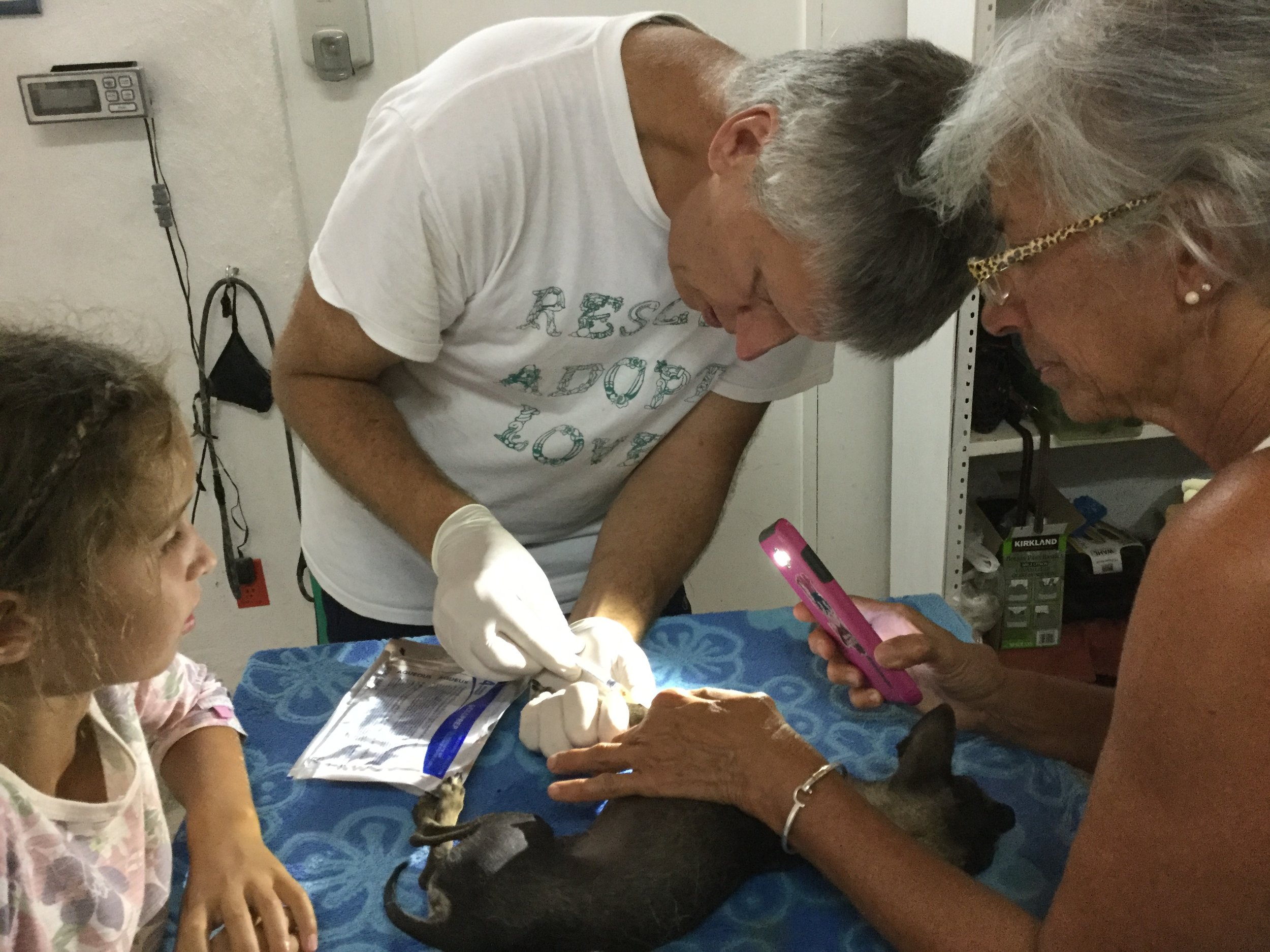 Here Dr. Rob is looking for a vein in a chihuahua. He needed a bit more anesthetic since after neutering he also had some teeth taken out.  There are no exam lights so Karen used her phone flashlight.