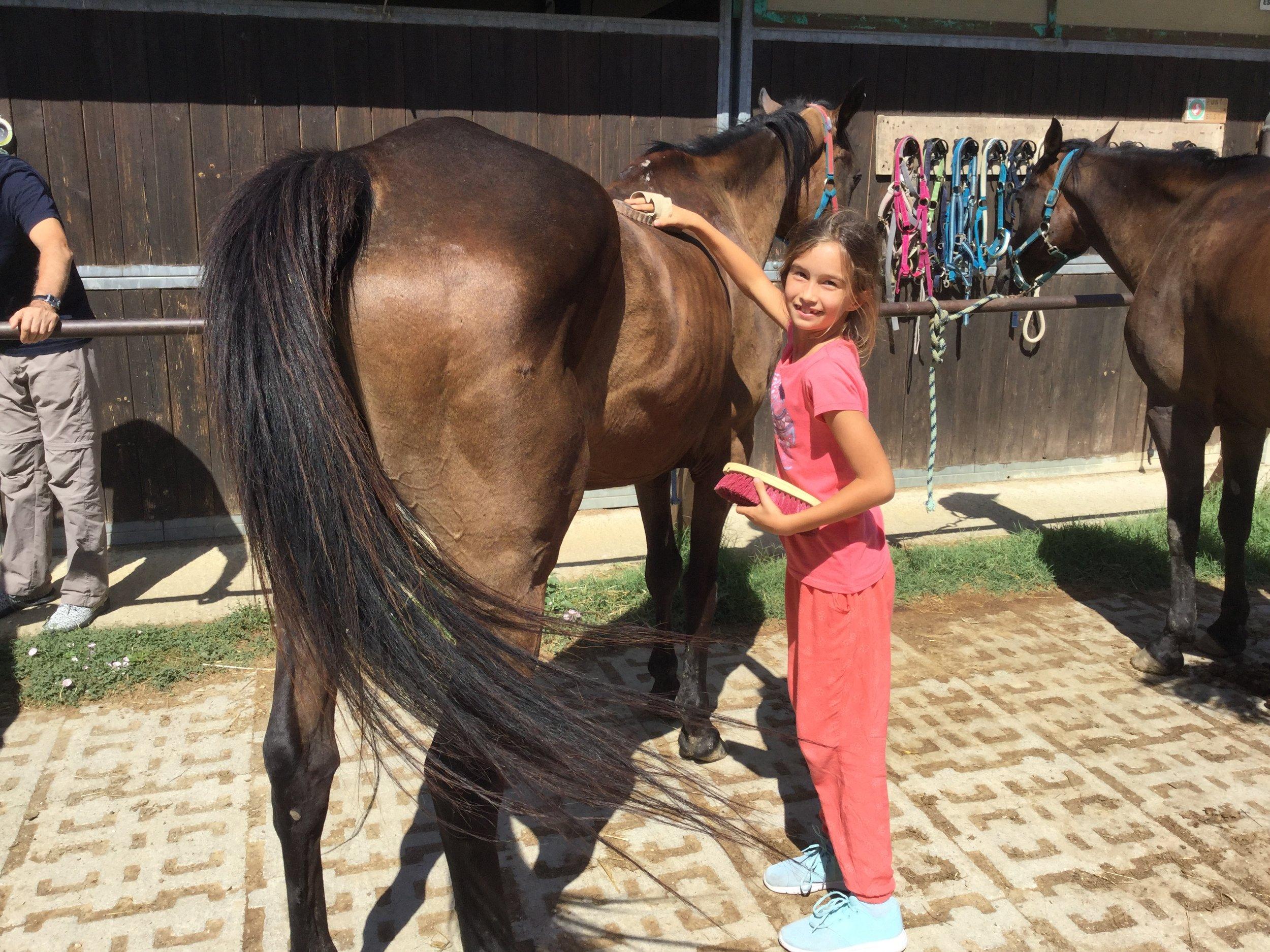 Happy horse helper.