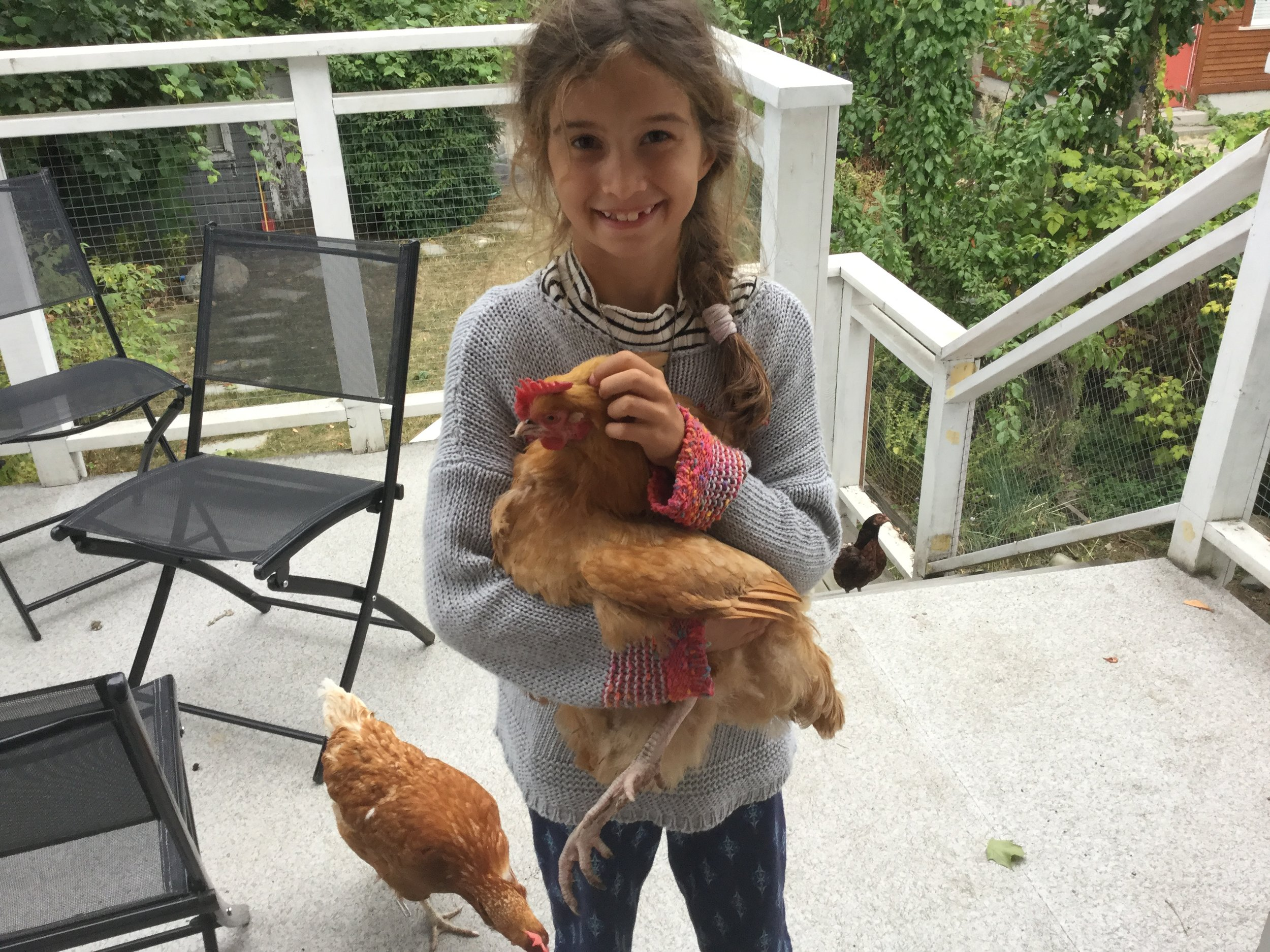 This one shows all three chickens: BigEye, Buffy and Bruna.