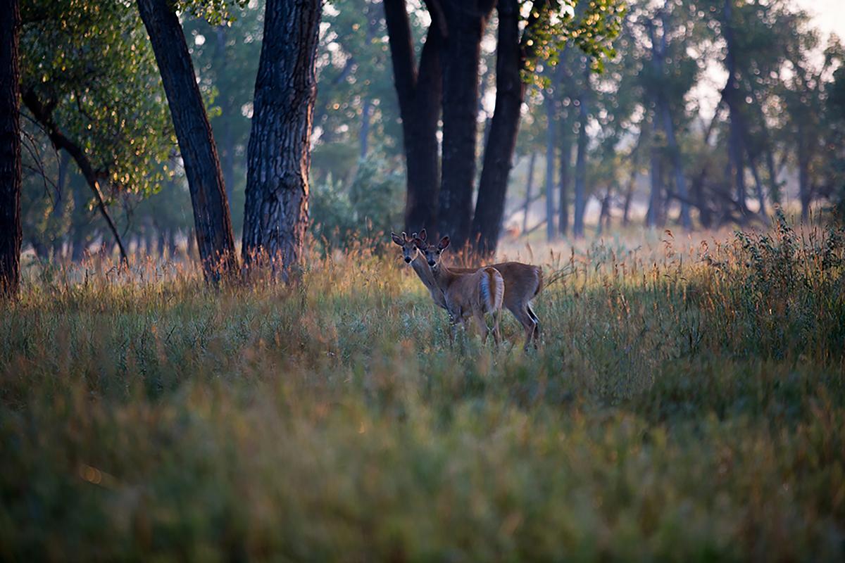 Twin deer, Twin Heart Ranch 2015