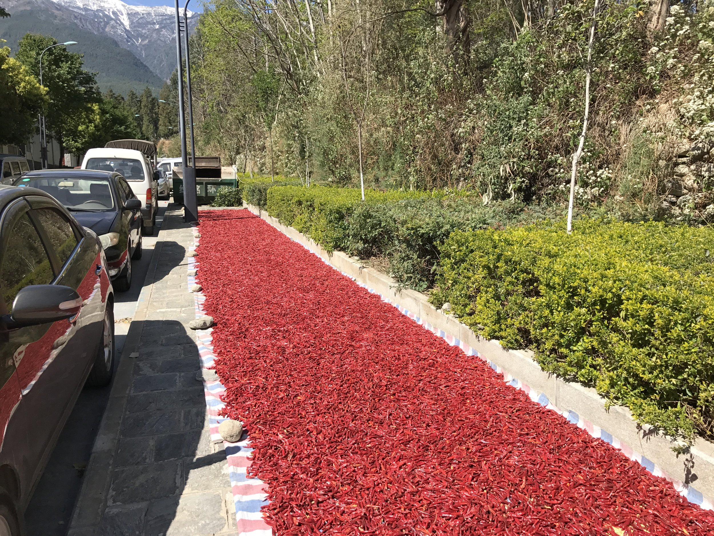 Drying chili peppers on the sidewalk in Dali