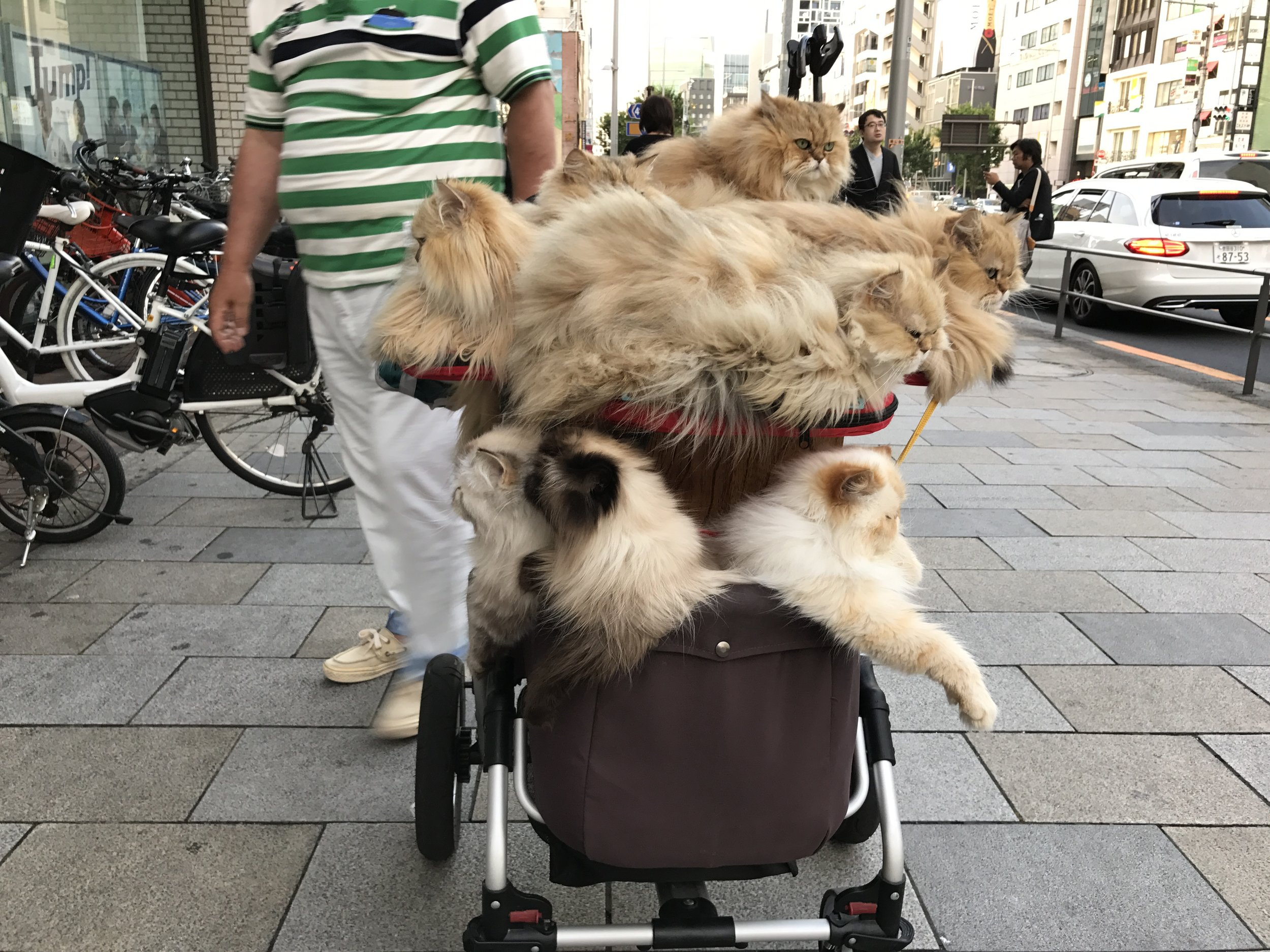 Baby stroller full of cats? In Tokyo, it's just an average day on the sidewalk.