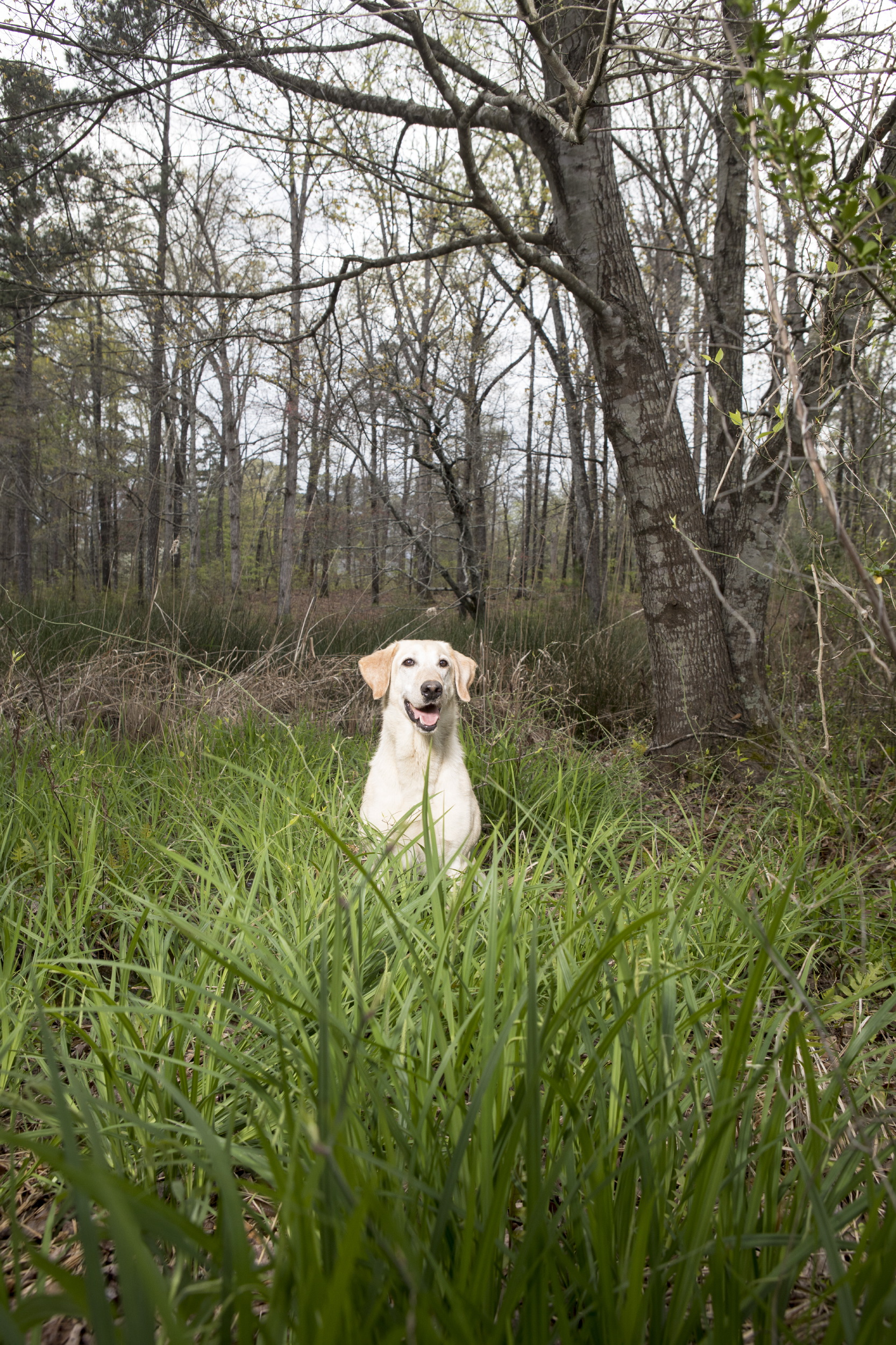 Training your Lab for Field & Stream