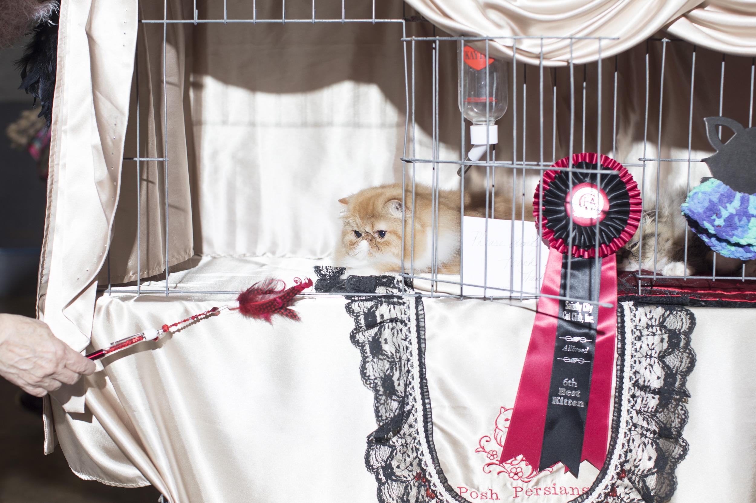 Members Only - Best Feline