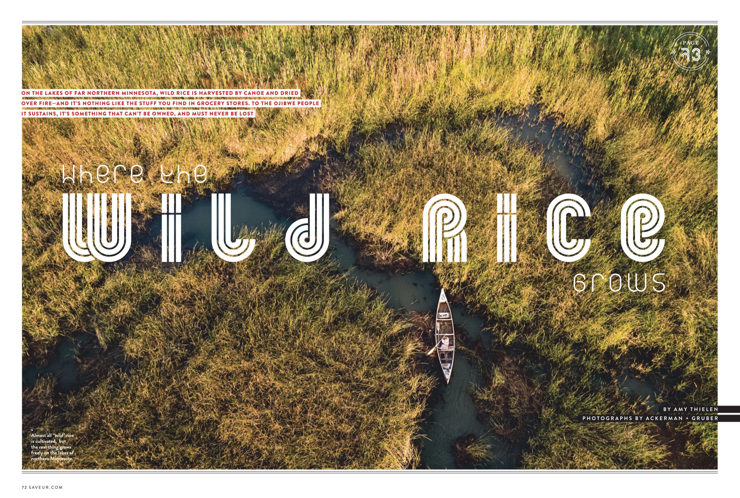 WildRice01.jpg