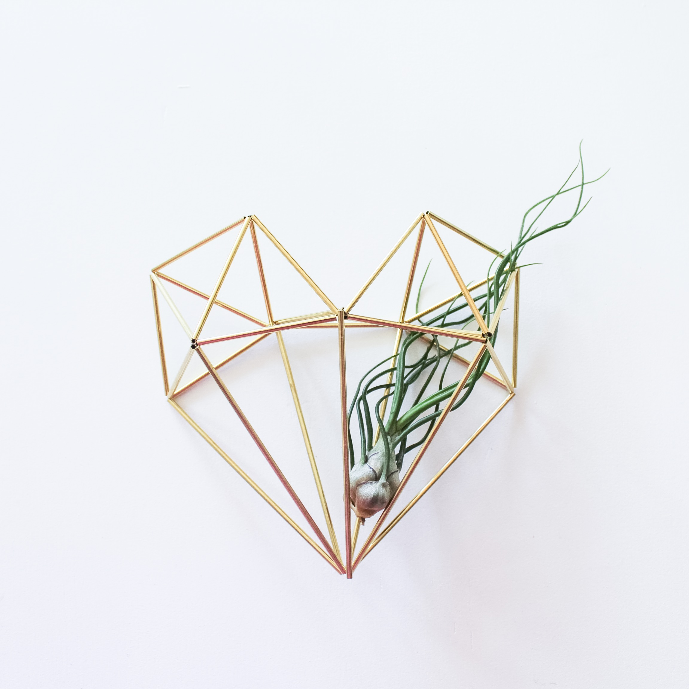 The Himmeli Heart + Tillandsia Bulbosa