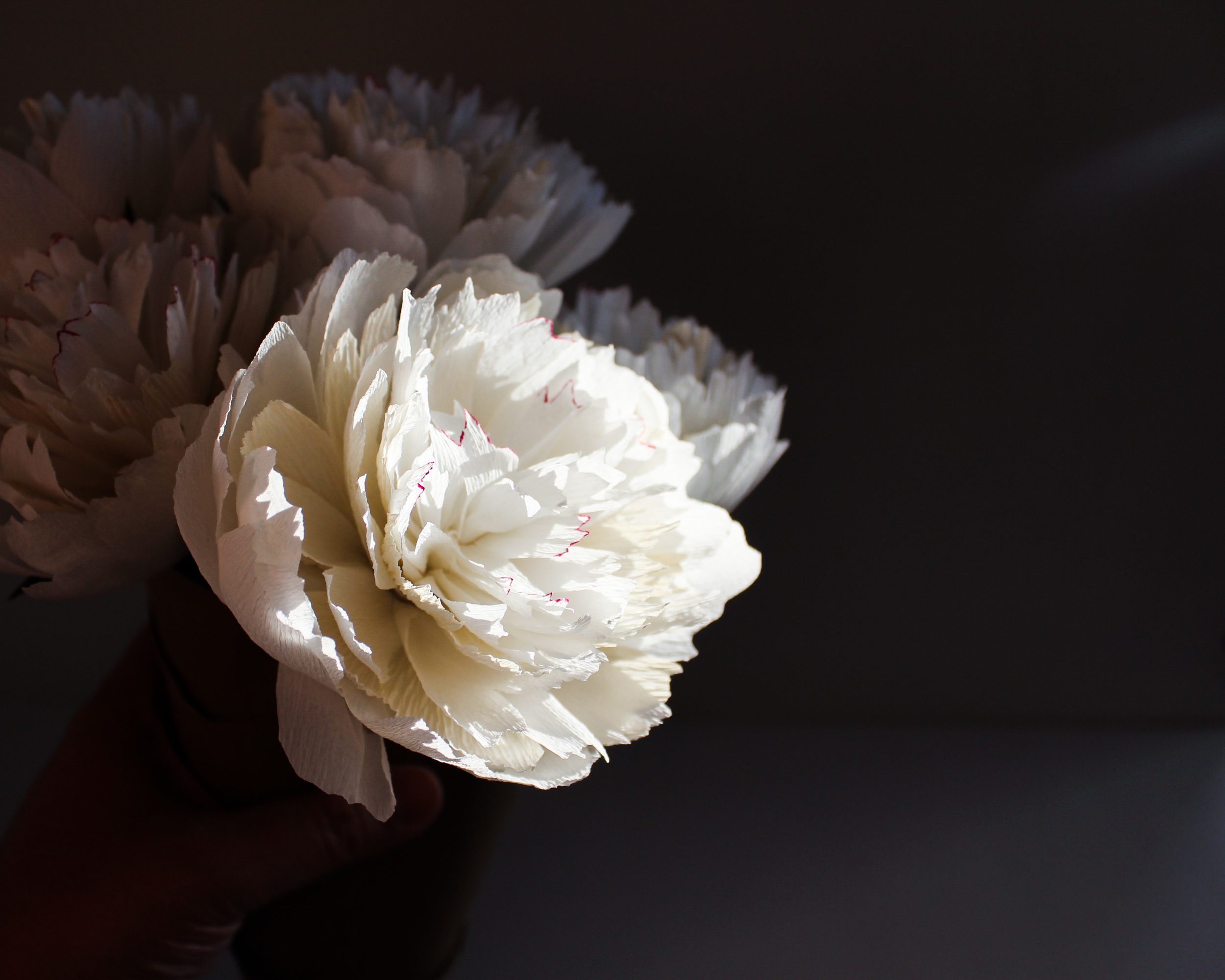 Paper Peony by The Cobra Lily