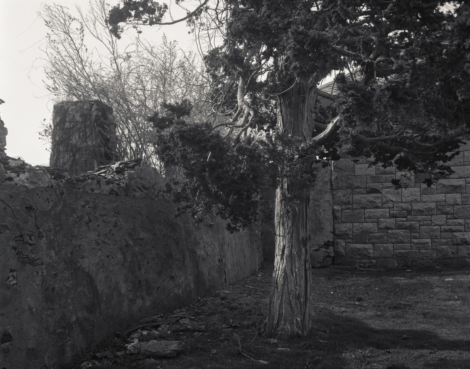 Tree&Sun001.jpg