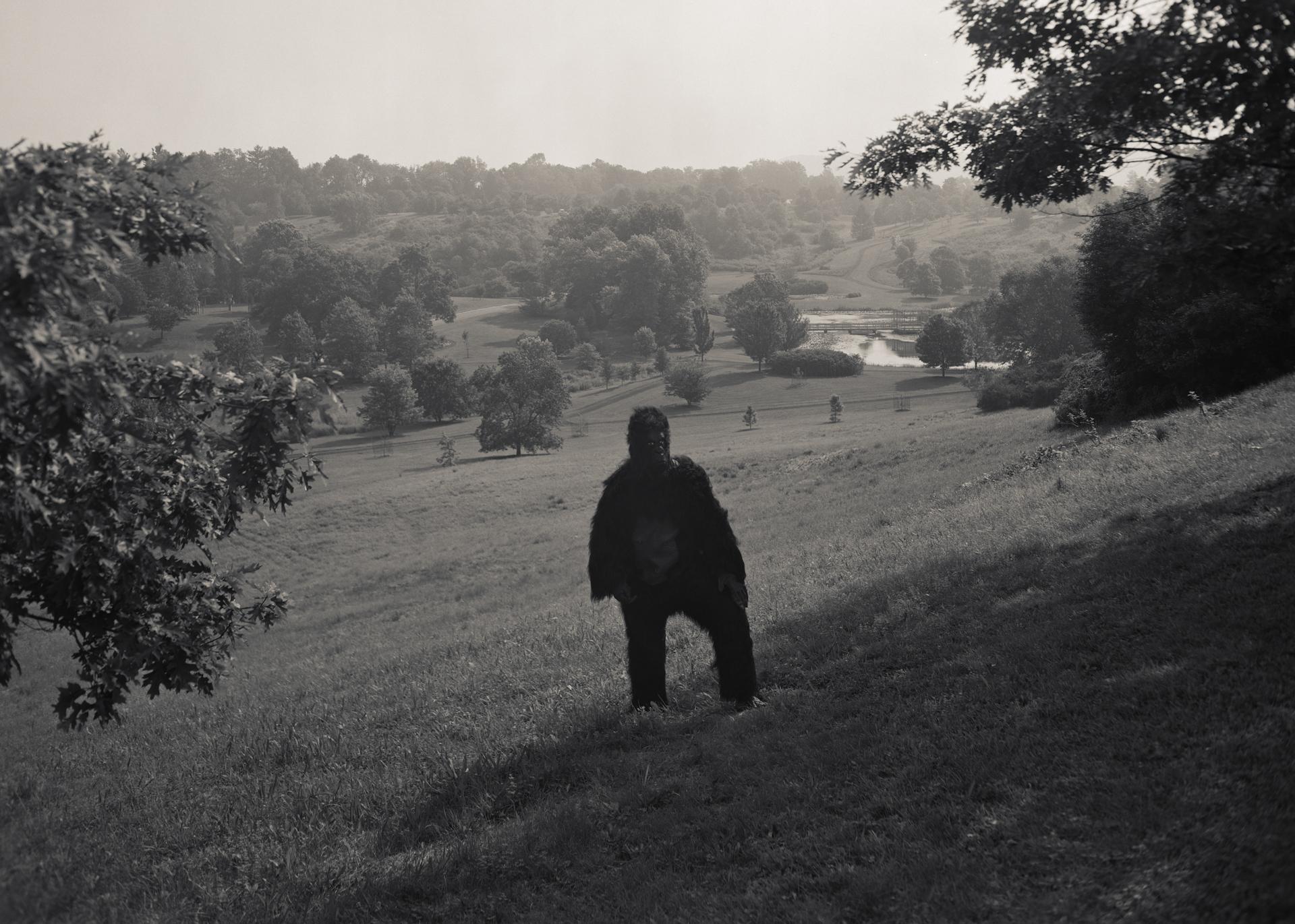 Gorilla-In-The-Field001.jpg