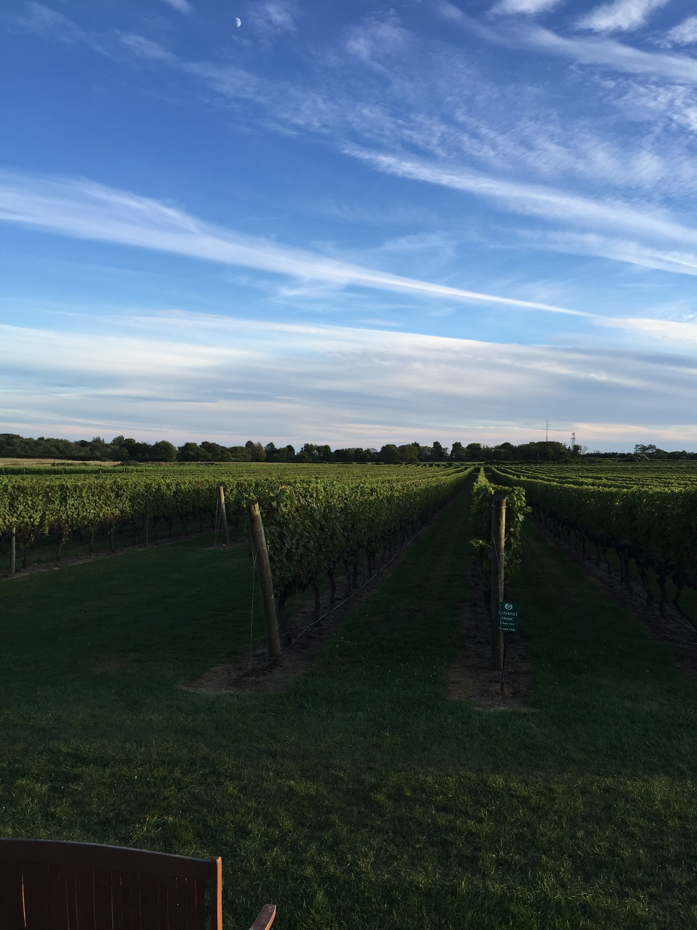 The View of the Vineyards
