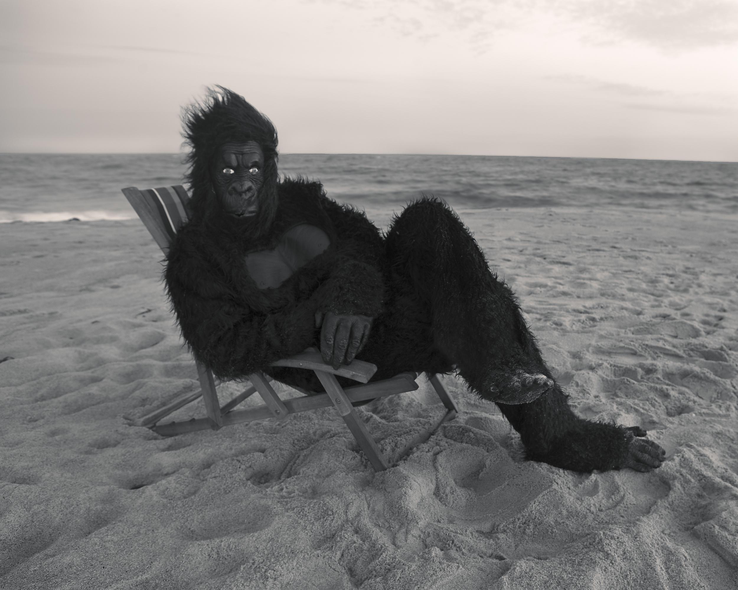 Gorilla On the Beach