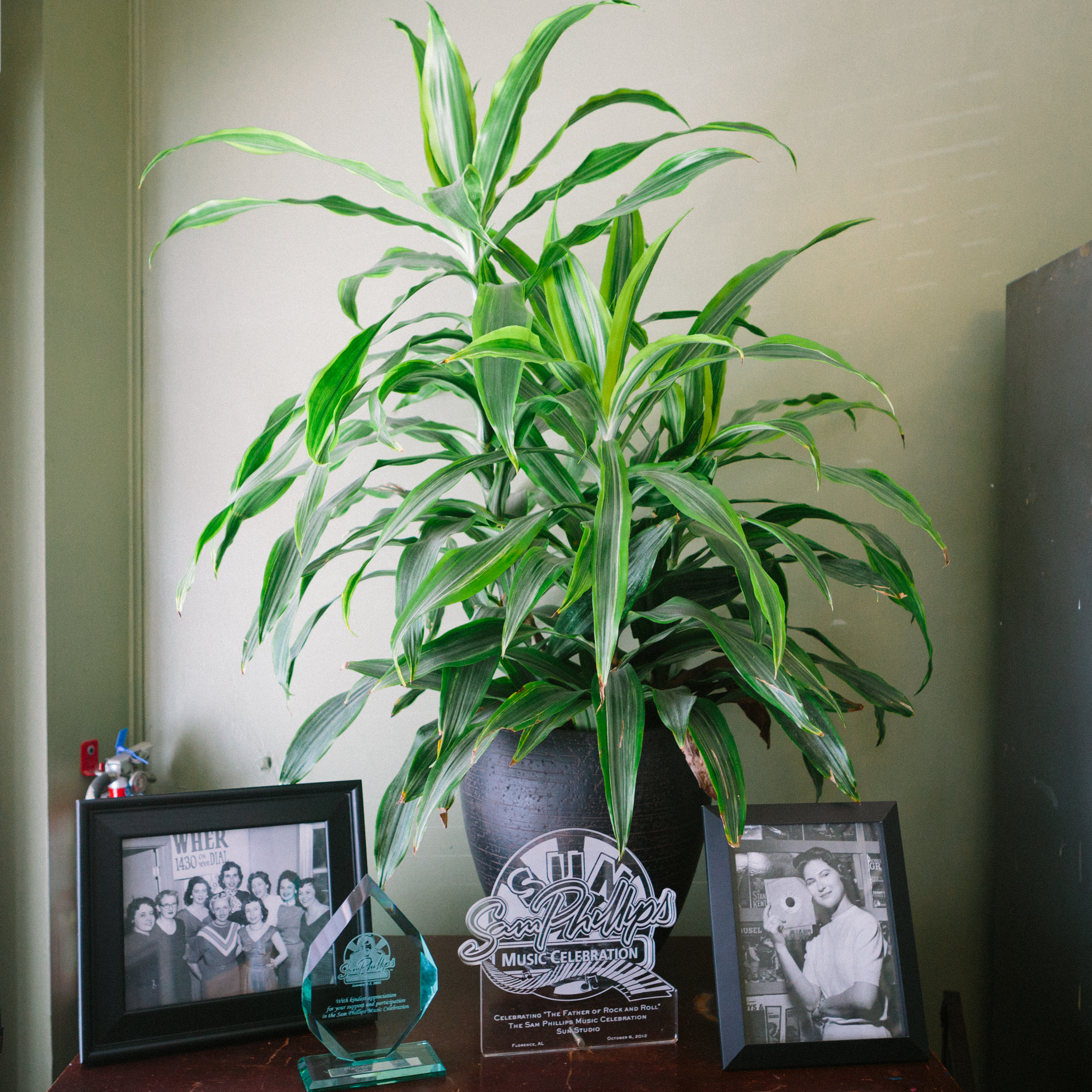 Houseplant in Sun Studio