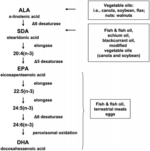 Figure 13: The  biochemical synthesis of beneficial fatty acids . Modifications of naturally occurring enzymes may be able to bias fatty acid synthesis to higher levels of these fatty acids in future  in vitro  meats.