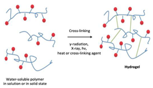 Figure 4. Hydrogels can be cross-linked through a variety of methods based on chemical properties of the monomers. Leveraging different chemistries allows scientists to mimic properties of the ECM such as stiffness, topography, biodegradability, and inclusion of soluble molecules such as growth factors. From  Bi and Liang, 2016 .