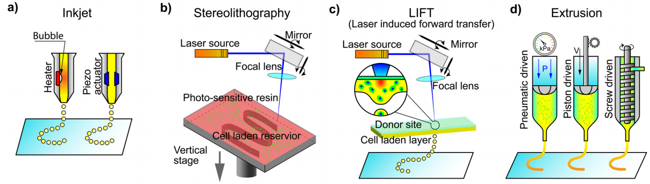 Figure 1. A visual overview of common bioprinting techniques, described below. Extrusion or stereolithographic techniques are most likely to be used in cell-based meat research and development. From  Jiang et al., 2019 .