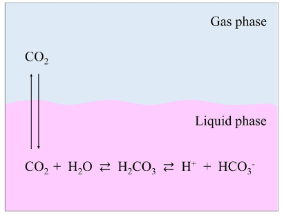 Figure 4. The pH control mechanism of culture media, based on the bicarbonate buffer system and the Henderson–Hasselbalch equation. When dissolved in water, sodium bicarbonate (NaHCO3) dissociates to form a sodium ion (Na+) and a bicarbonate ion (HCO3−). The latter reacts with H+ in solution to form carbonic acid (H2CO3), which dissociates into CO2 and H2O. These two reactions attain their respective equilibria. The CO2 in solution also reaches equilibrium with CO2 in the gas phase. As a result, increasing the concentration of gas phase CO2 increases the amount of CO2 that is dissolved in the culture medium, in turn raising the H2CO3 concentration and lowering the pH. In contrast, if the concentration of the gas phase CO2 is lowered, then the pH rises due to the reverse reaction. The relationship between the culture medium pH and the concentrations of CO2 and NaHCO3 can be expressed by the Henderson–Hasselbalch equation: pH=pKa+log[HCO3−]/[CO2] in liquid phase, where: pKa is the negative log of the acid dissociation constant. From  Yao and Asayama, 2017 .