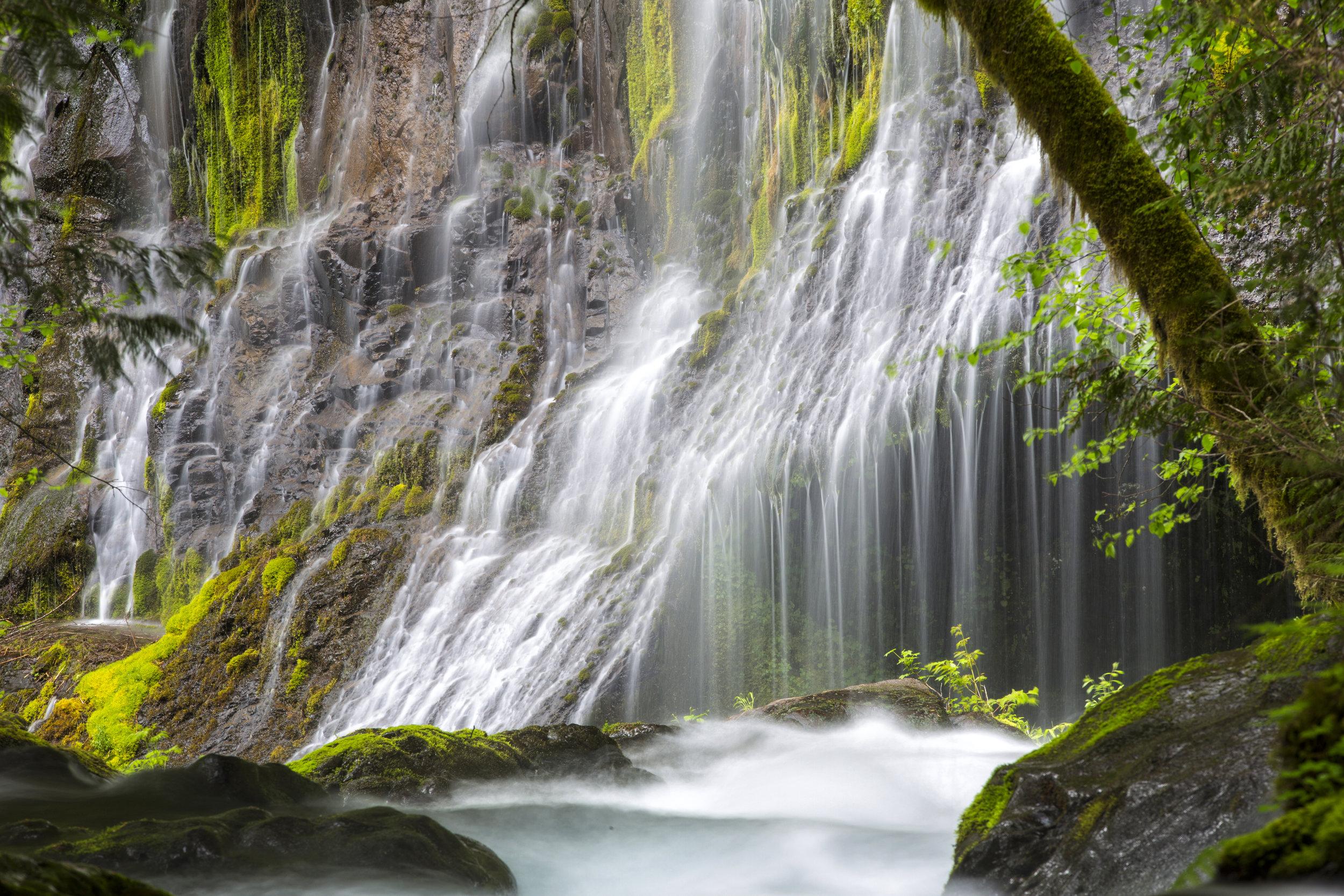 Panther Creek Falls -