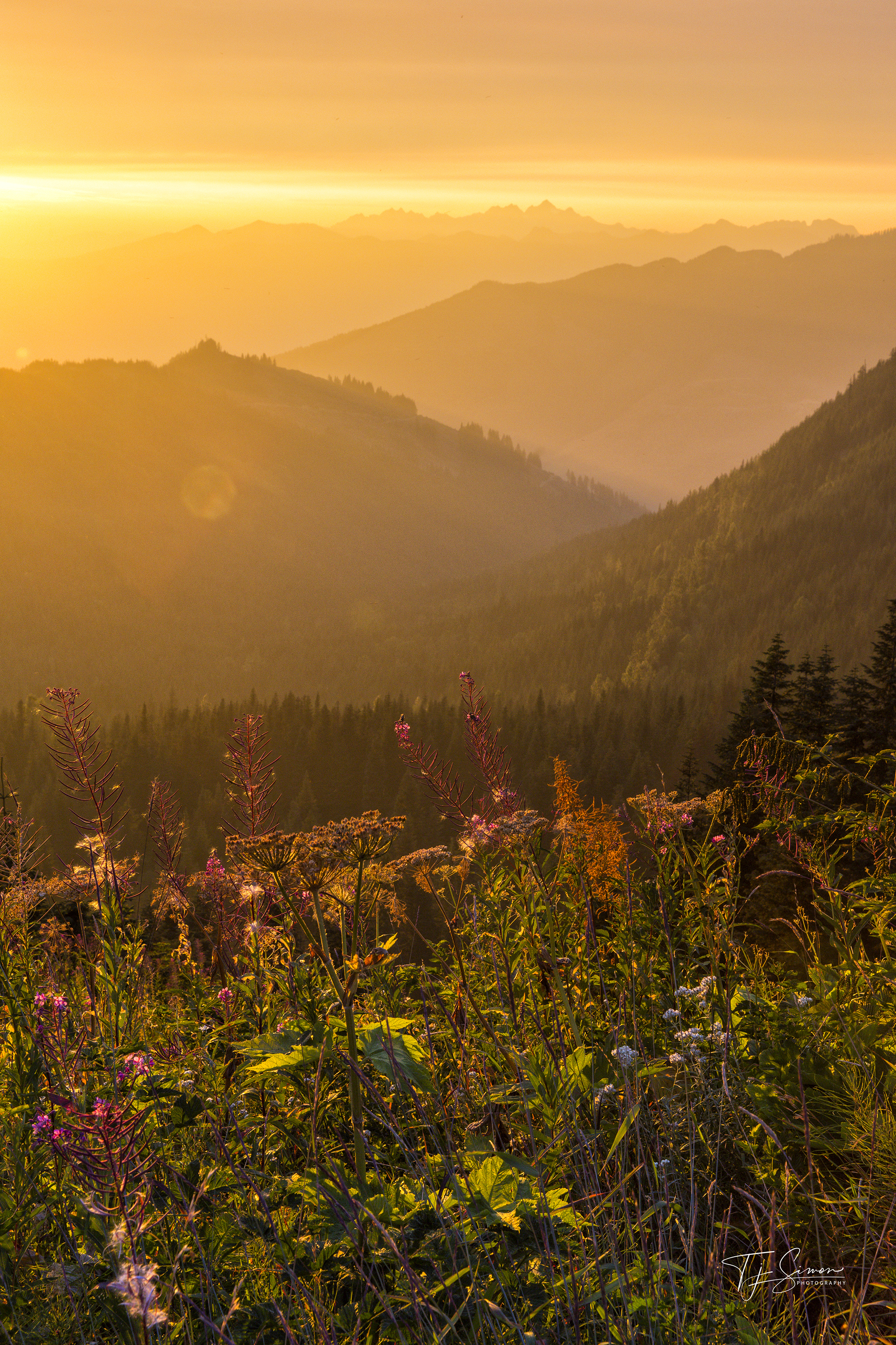 Wildfire and wildflowers