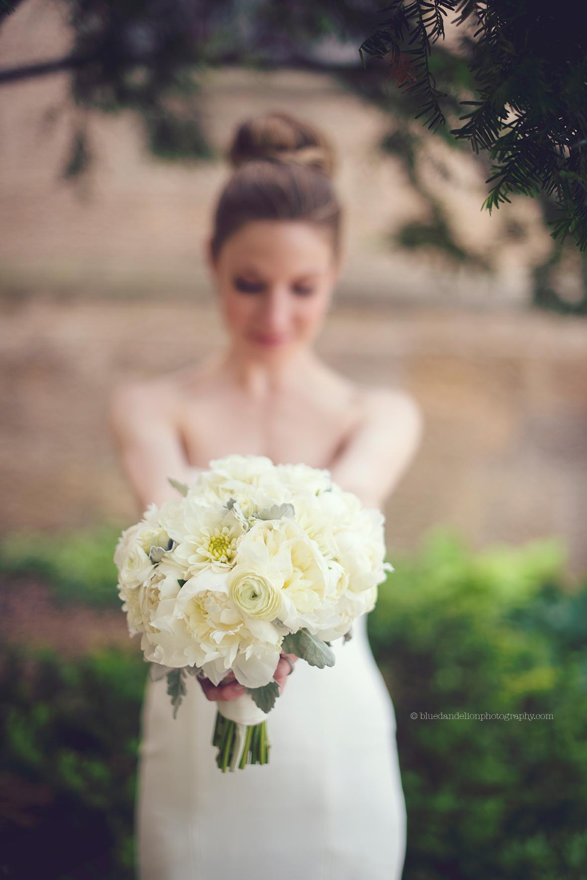 photo: blue dandelion