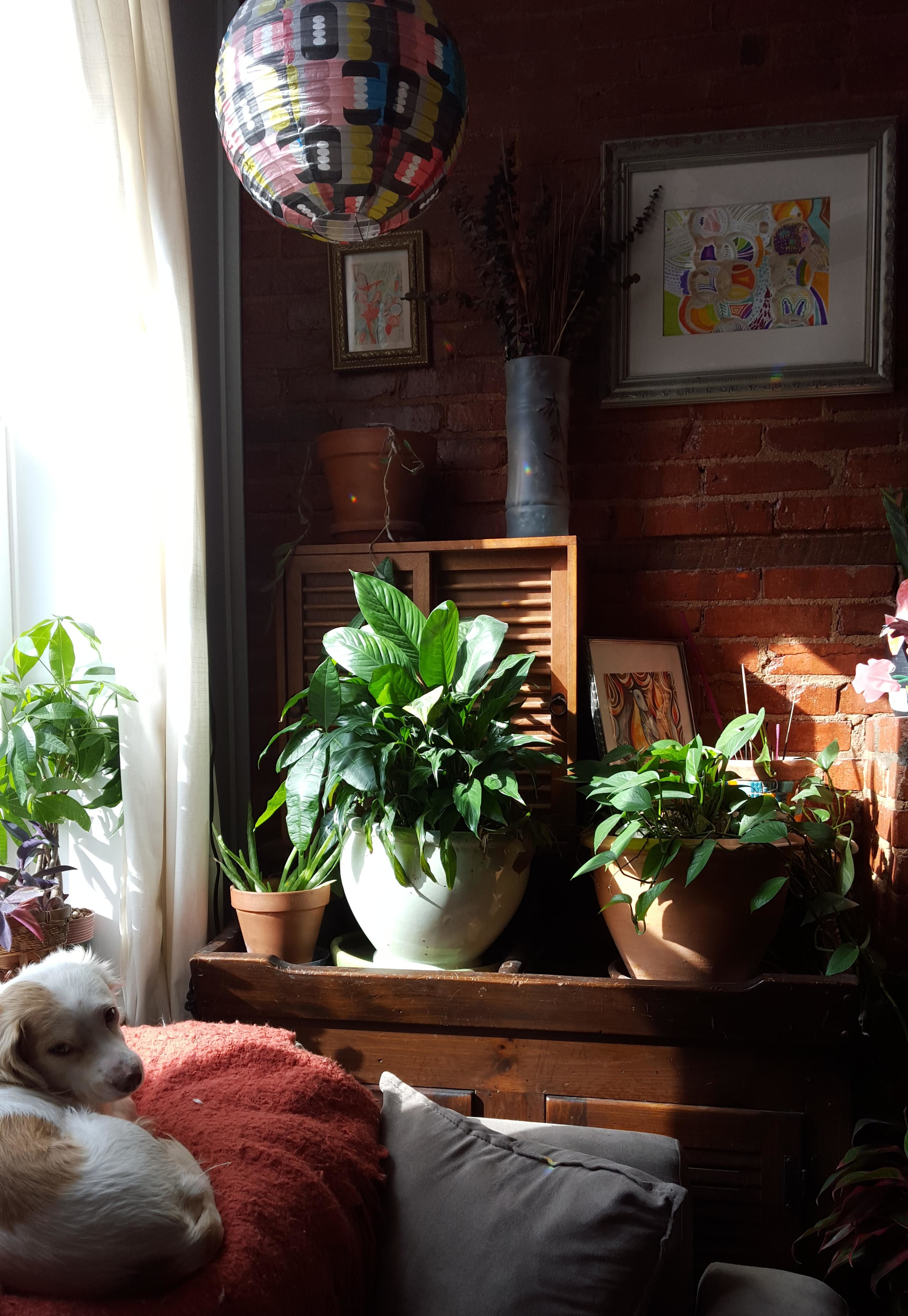 "An otherwise ""dead"" corner is brought to life with plants, color, a hanging light ... and one small dog."