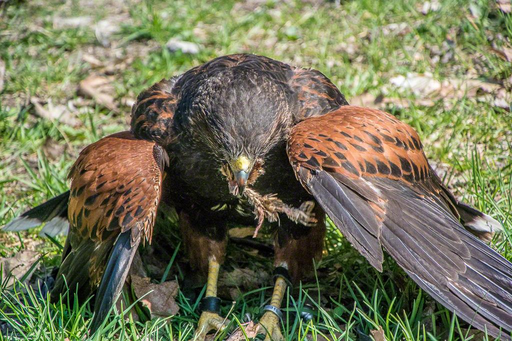BirdsPrey15-1771.jpg