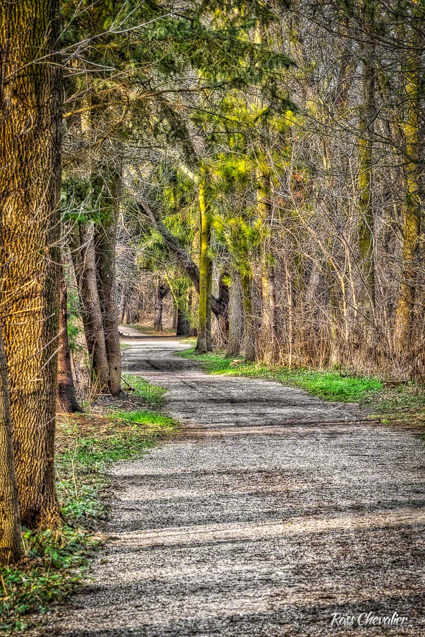 Looking down the walking trail at Rogers' Reservoir. Shot on the D4s at about 270mm from a tripod and processed in Aurora HDR Professional from a 3 image merge