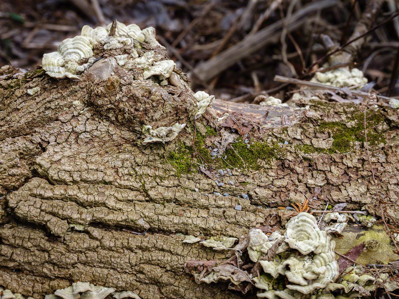 Log with Fungus.jpg