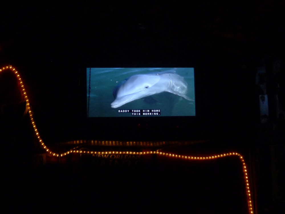 Perhaps Flipper's suicide was a deeply political act.