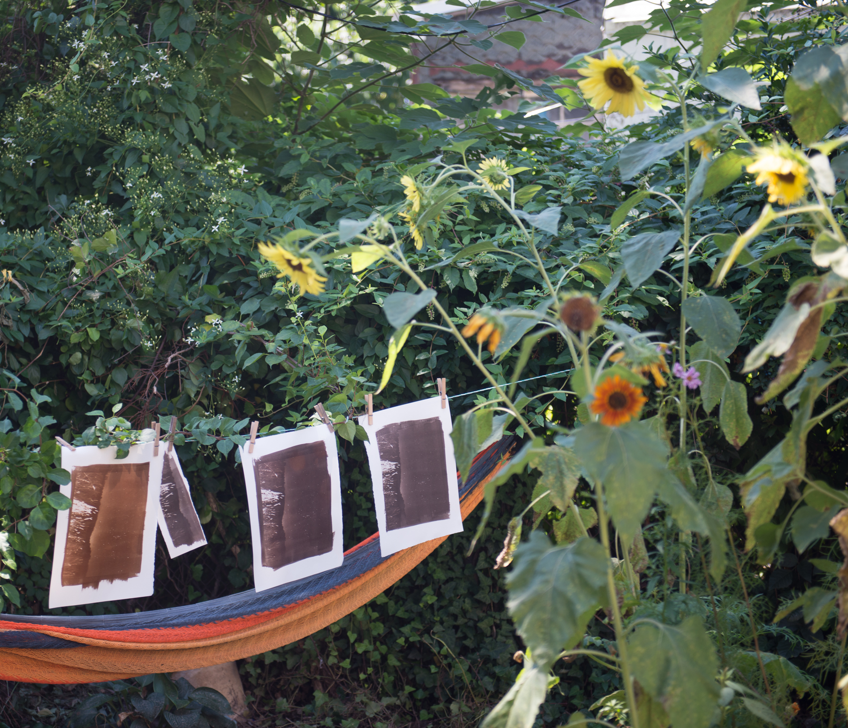 Prints drying on the backyard line - late August 2015