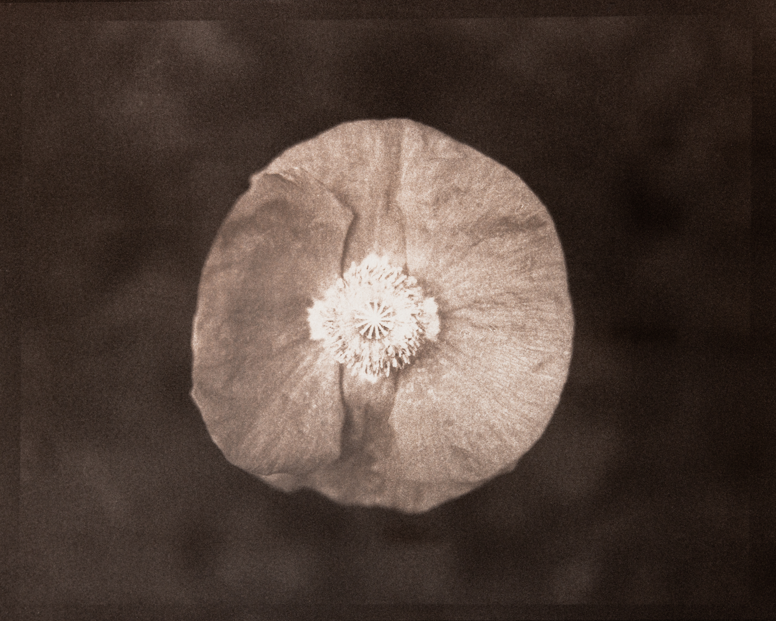 Poppy Mandala